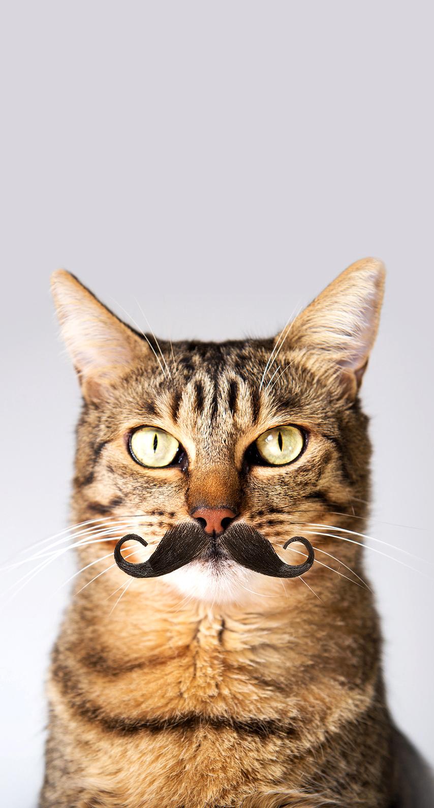 cat, moustache