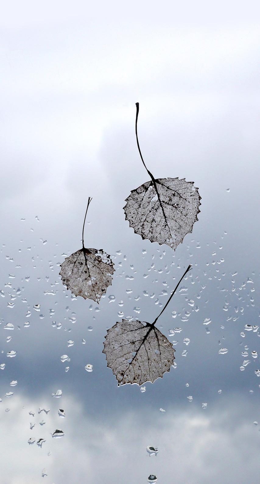 art, summer, window, desktop, no person, color, weather, reflection, season, cold, calm, twig