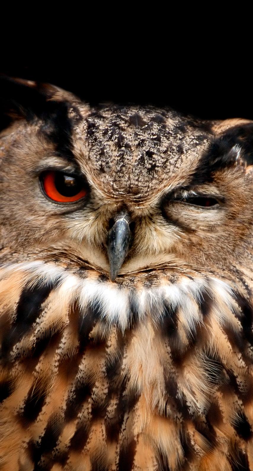 eye, owl