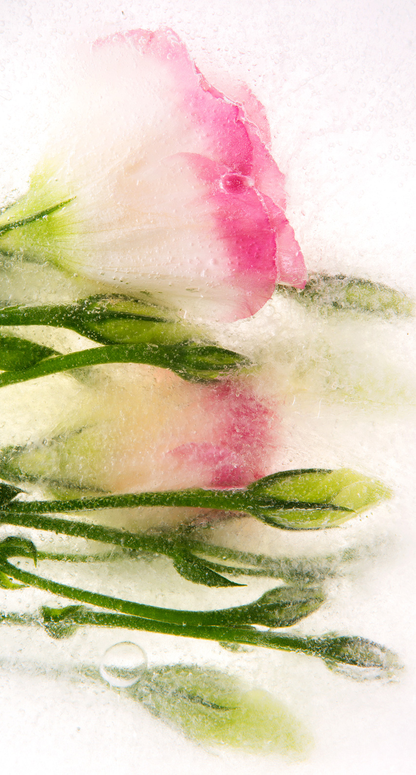 freshness, icee, healthy, fruit, refreshment, artwork, watercolor paint, acrylic paint, still life photography, rose family, H2O
