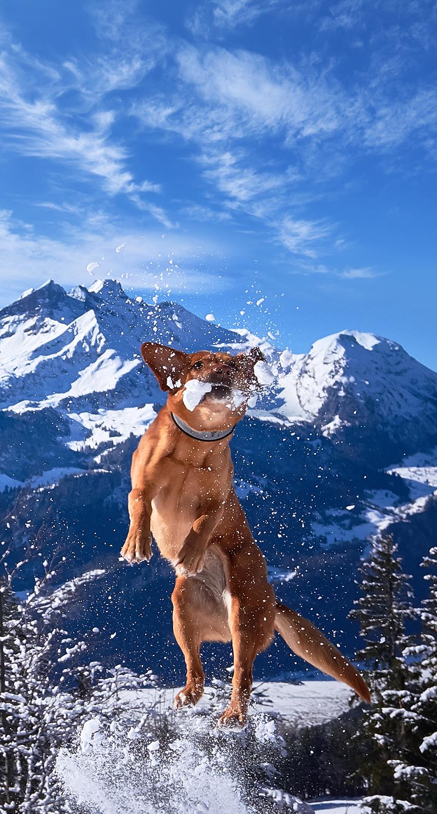 mountaineering, winter sport