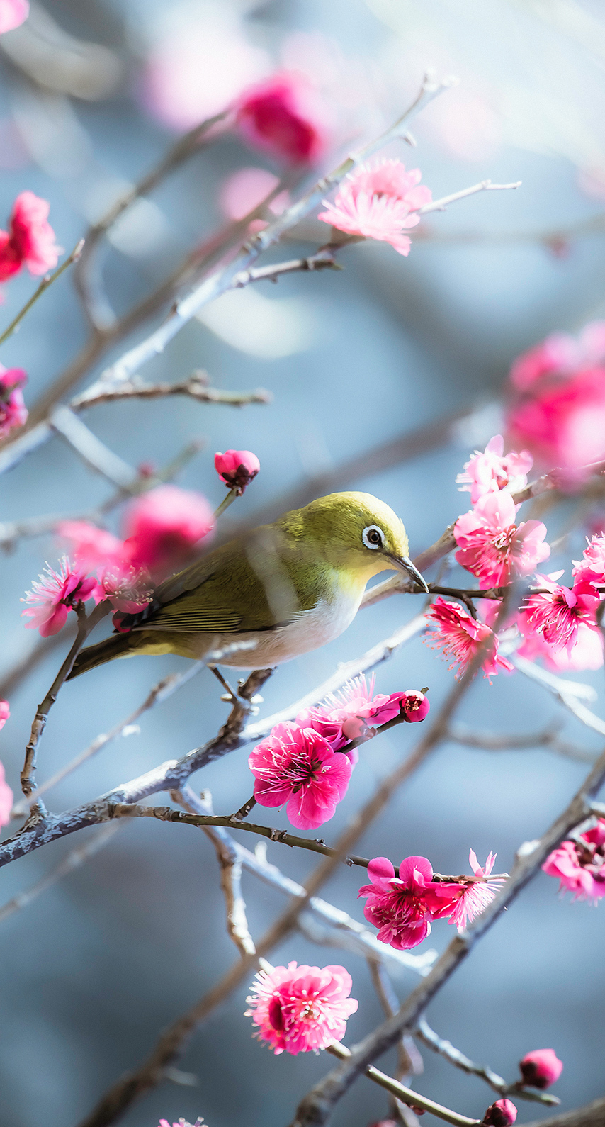 spring, morning