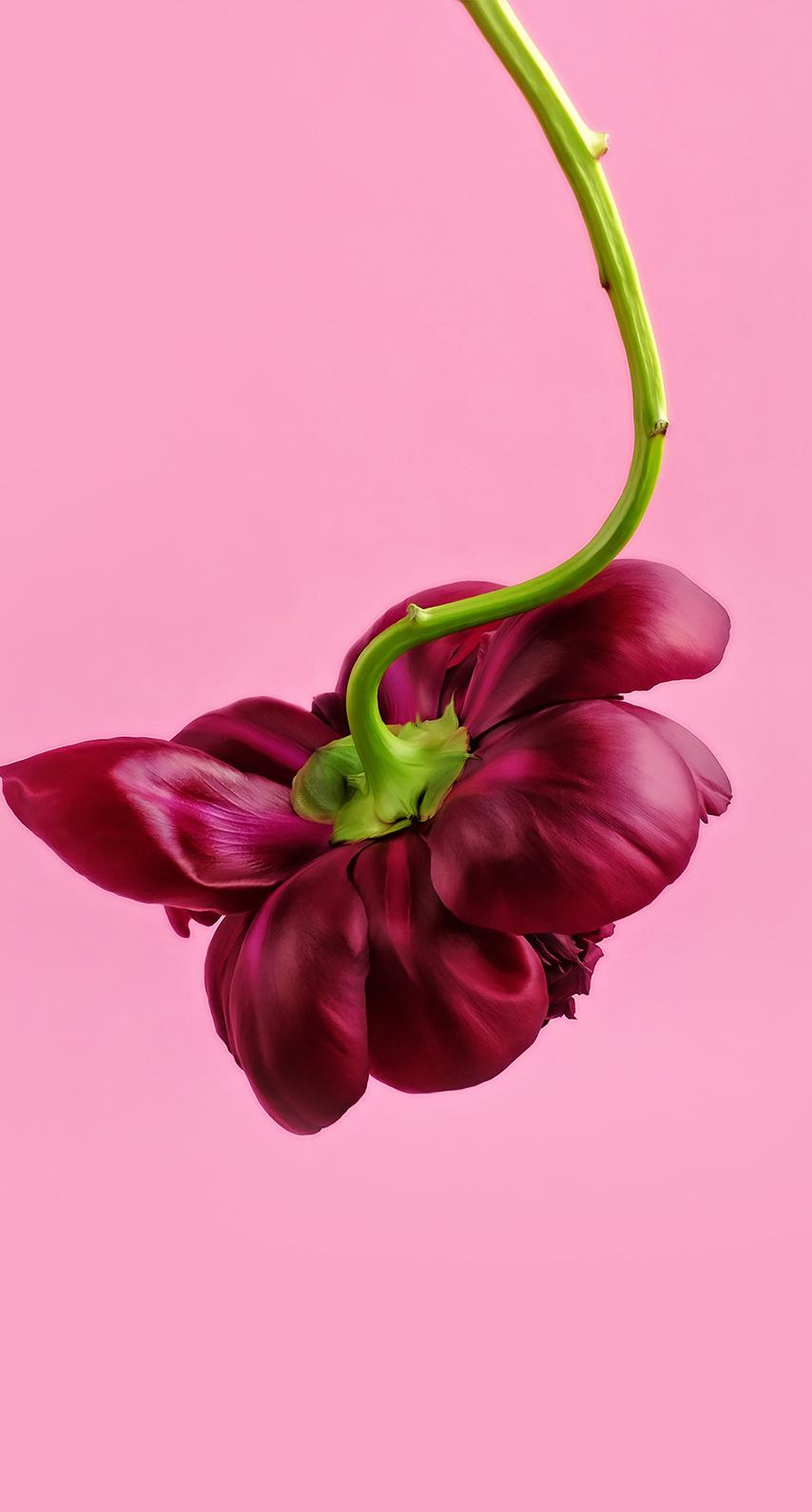 leaf, magenta