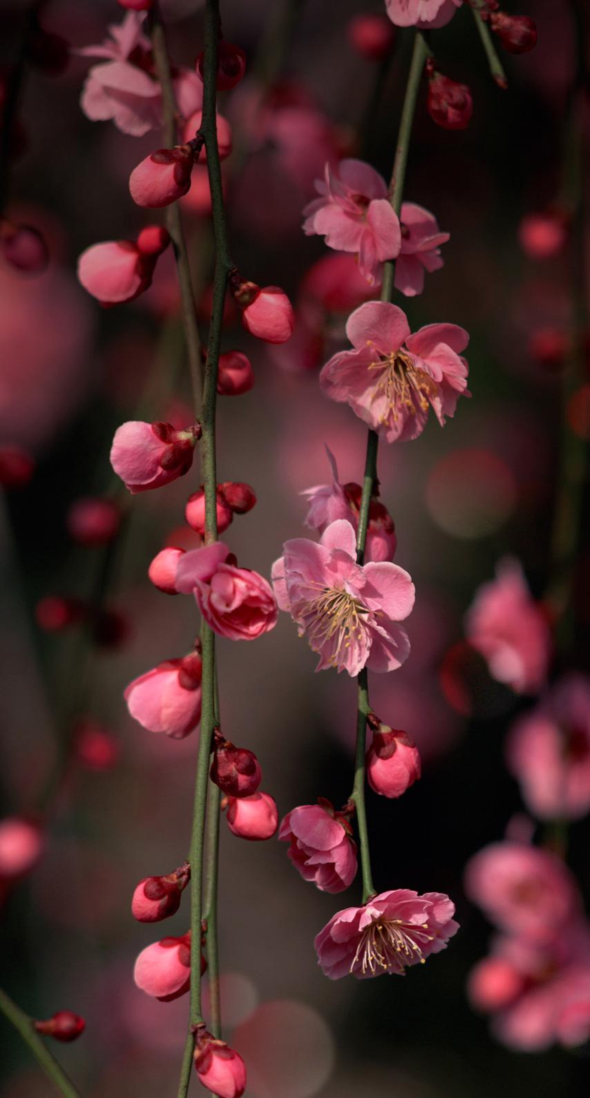 garden, blooming