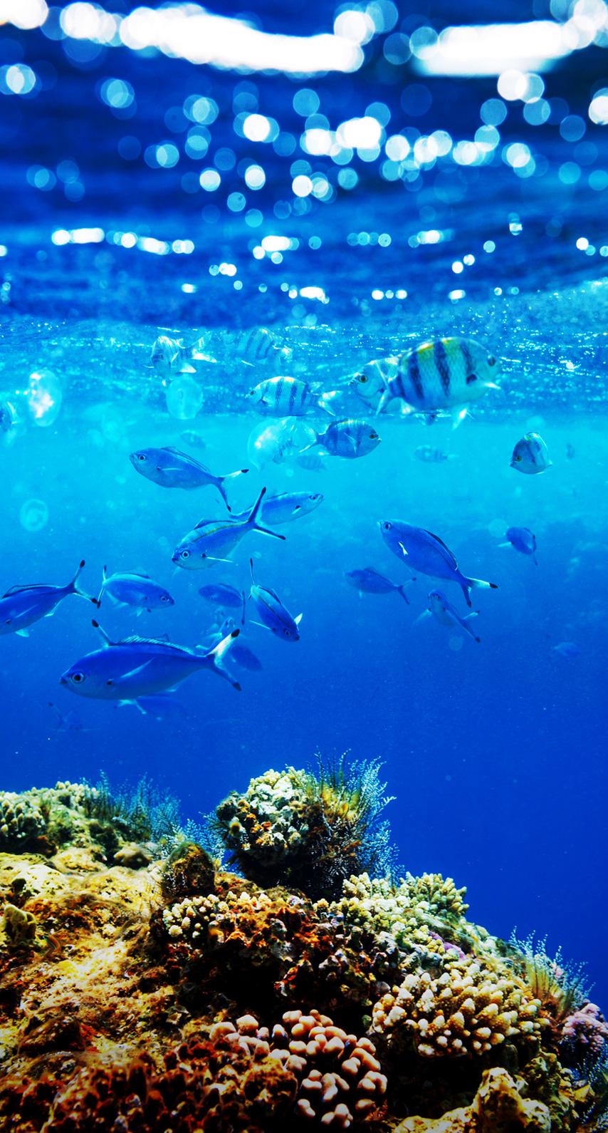seascape, organism