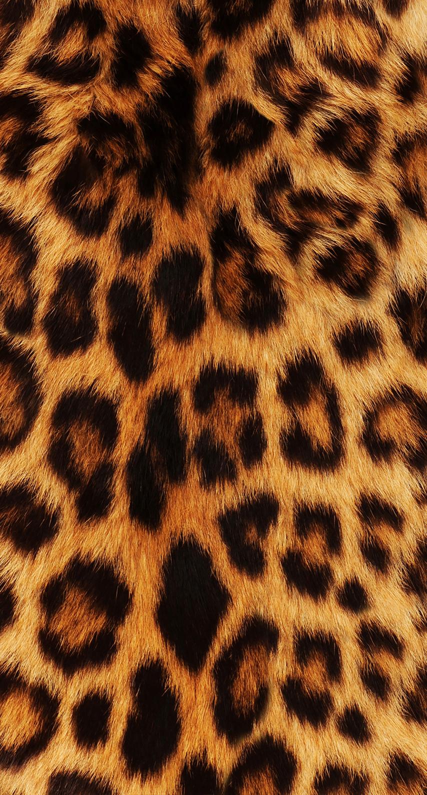 leopard, safari