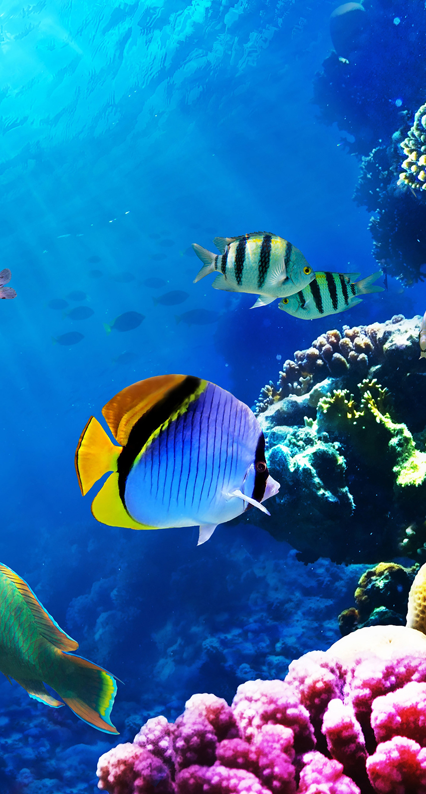 aquarium, swimming