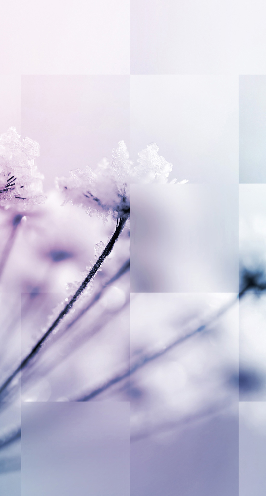 flora, petal