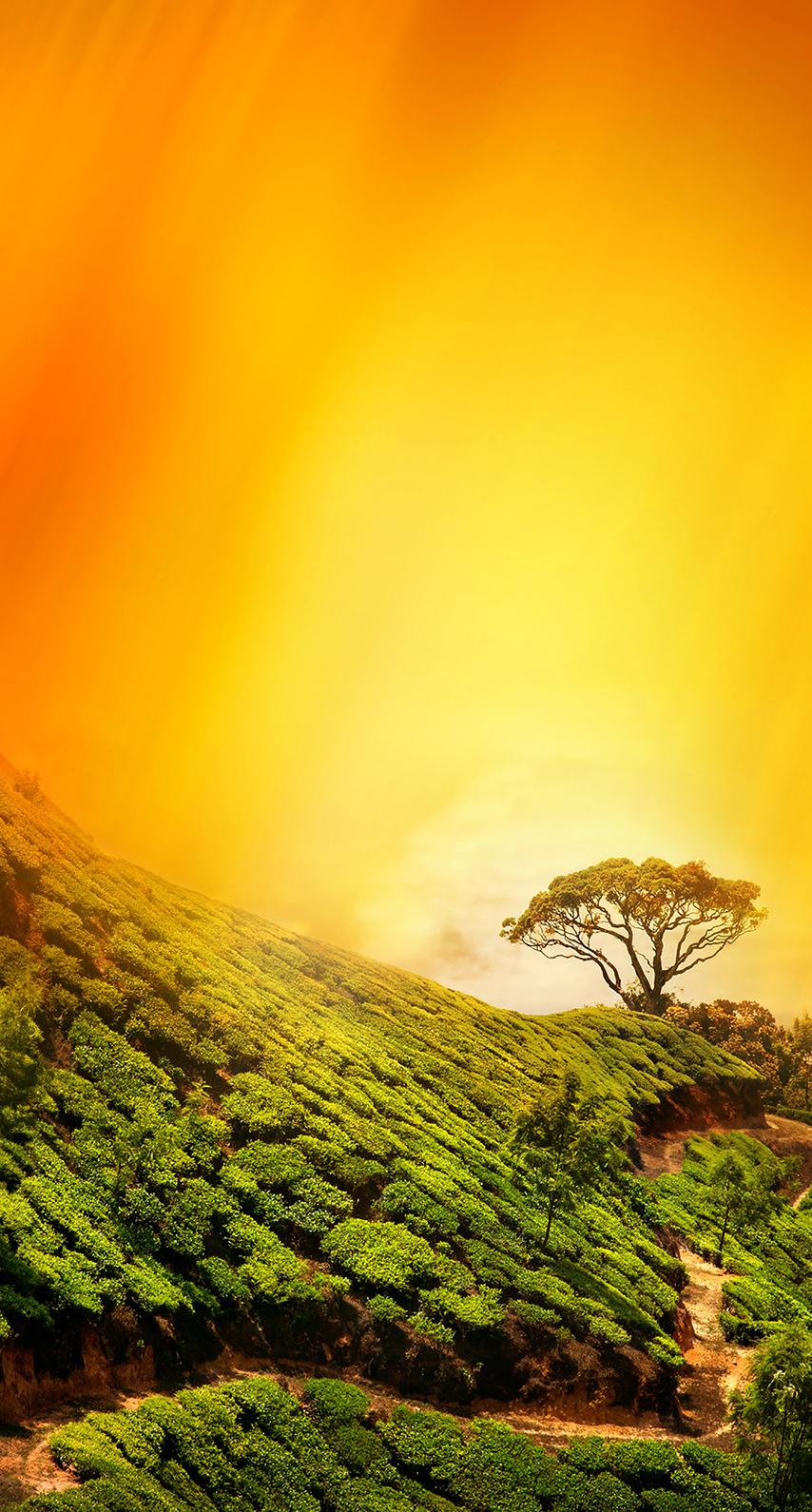 fog, pastel