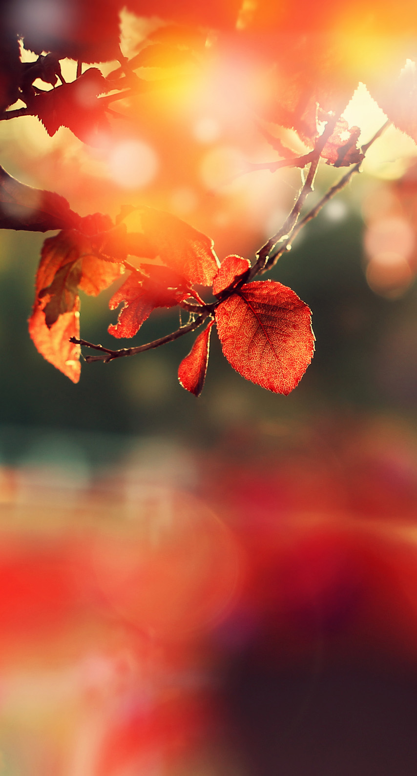 outdoors, flora
