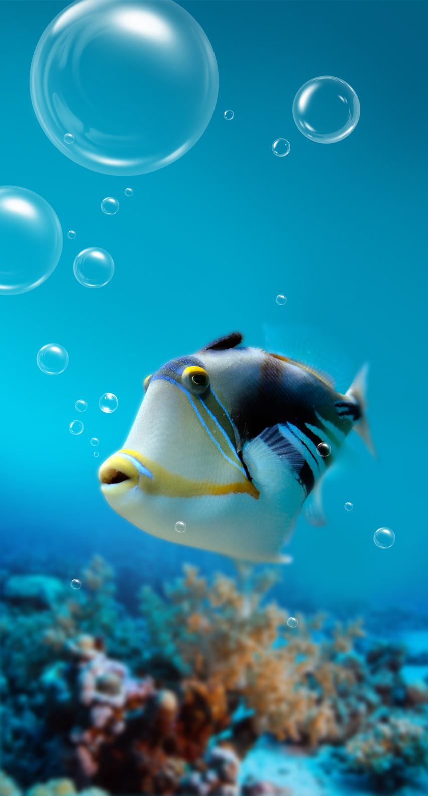 animal, diving