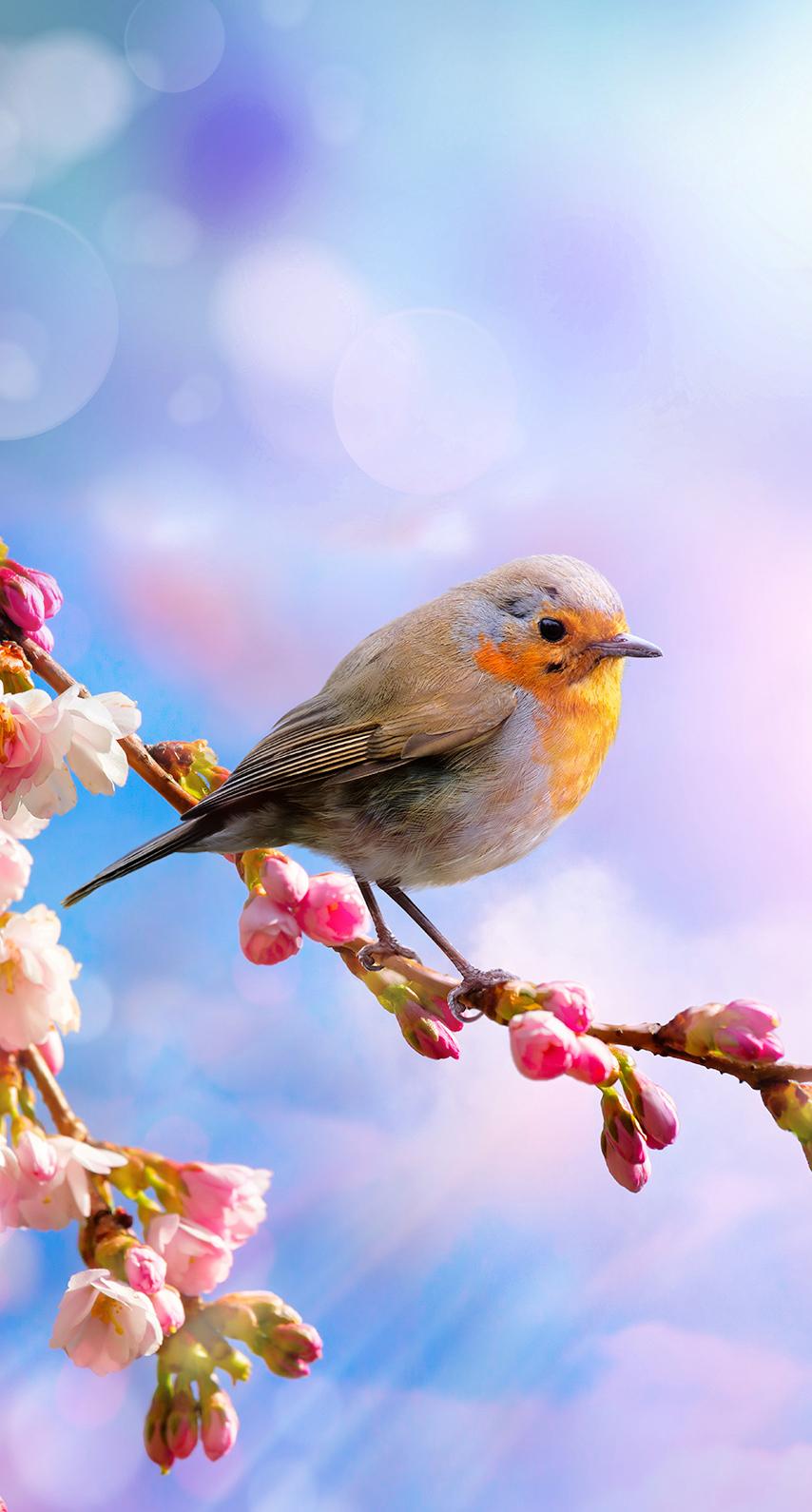 fauna, cherry blossom