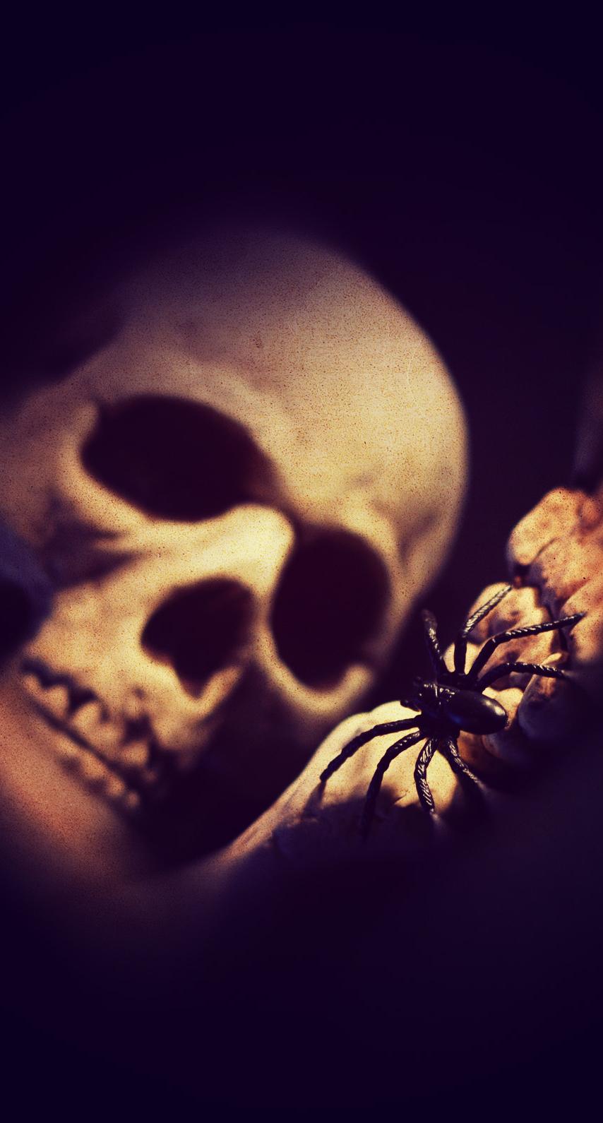 darkness, macro photography