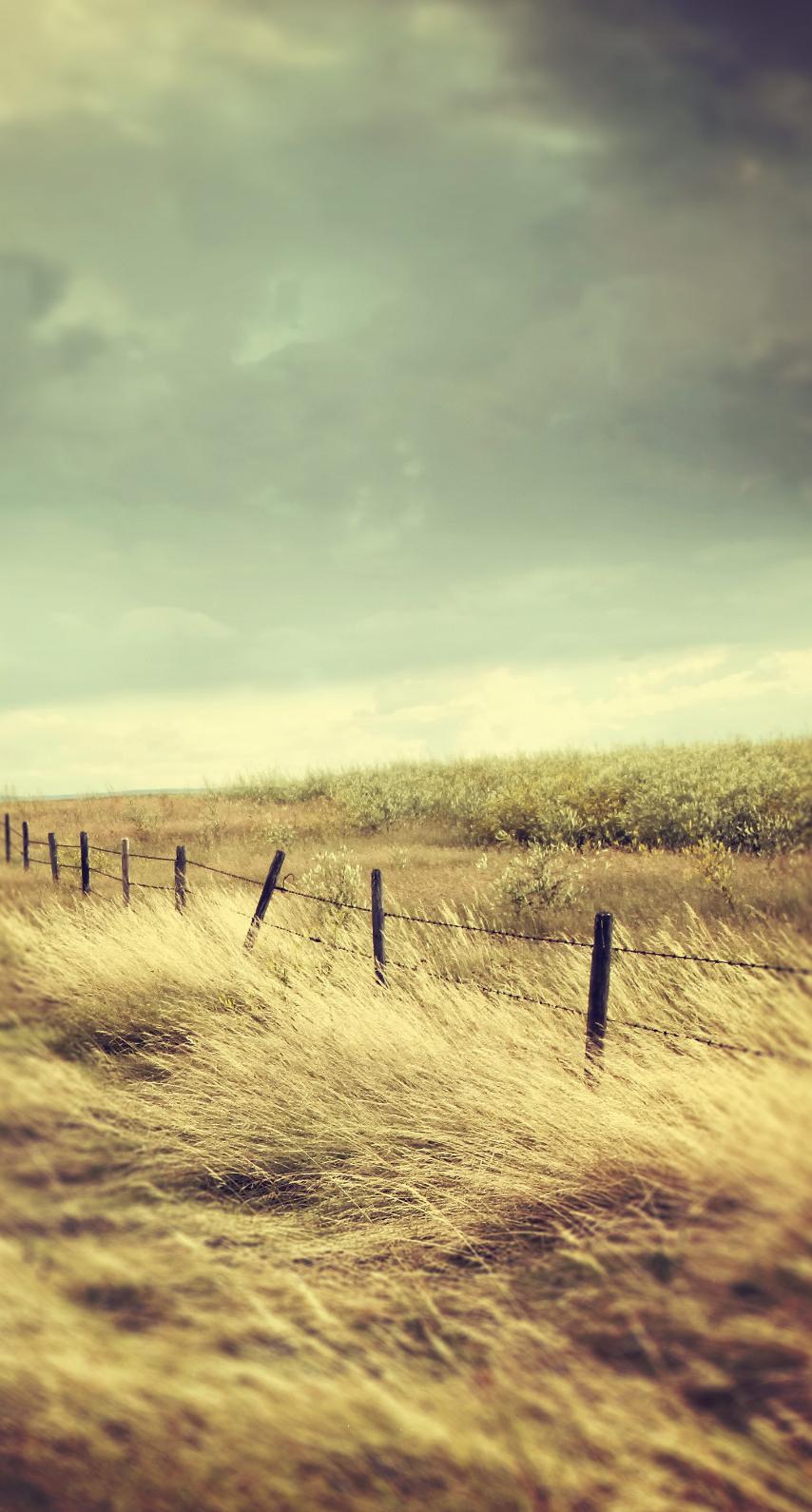 prairie, grass family
