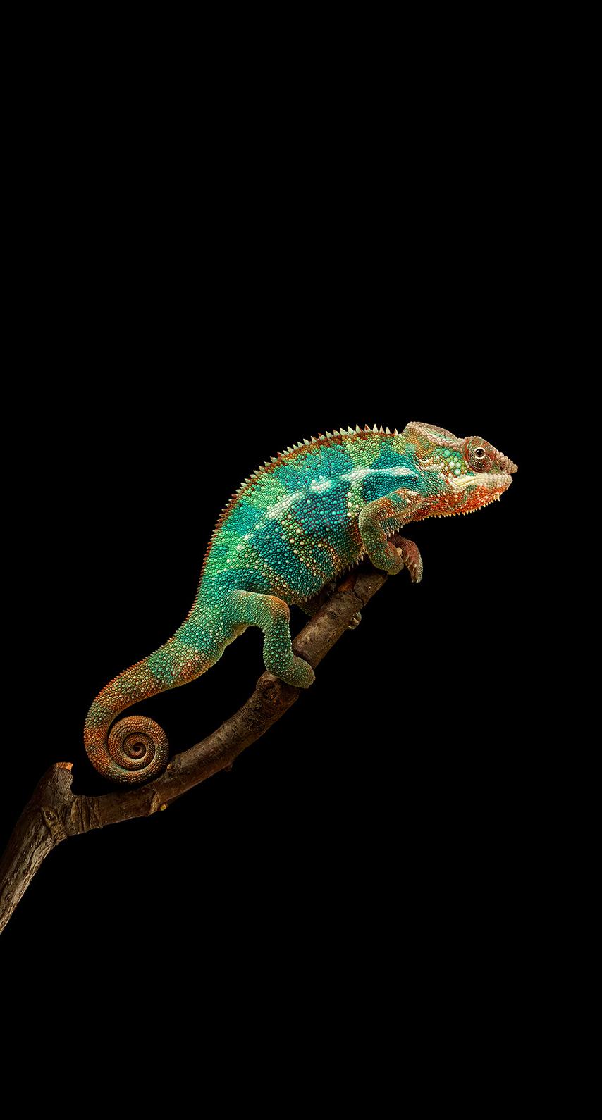 organism, scaled reptile