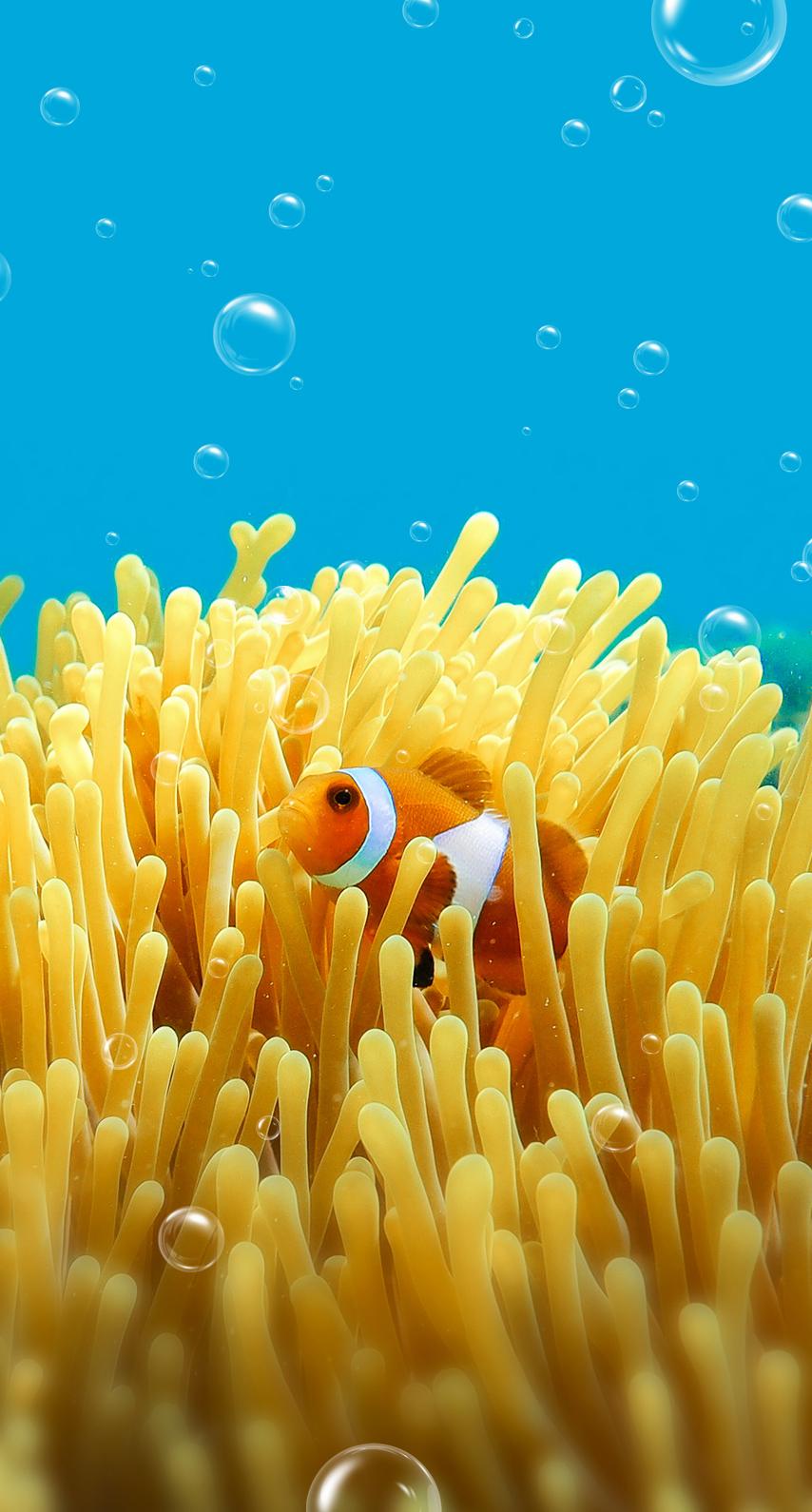 stony coral, pomacentridae