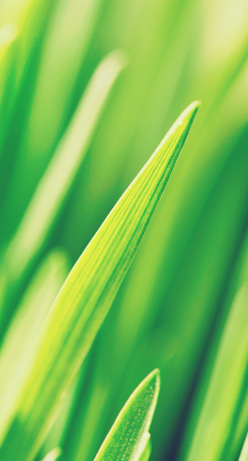 leaf, drop