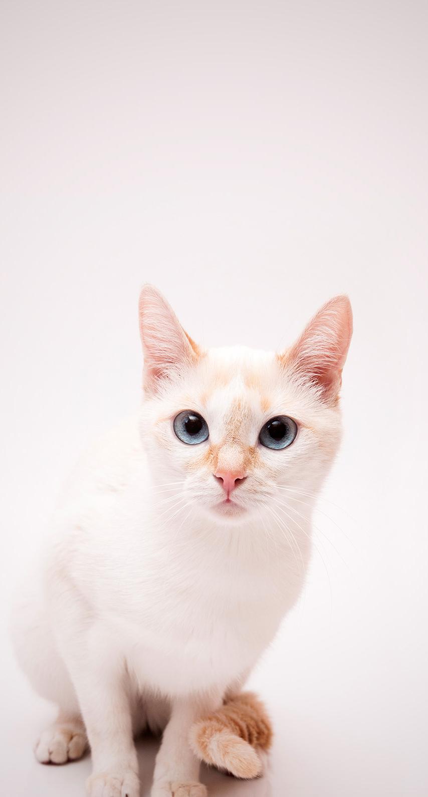 kitten, fur