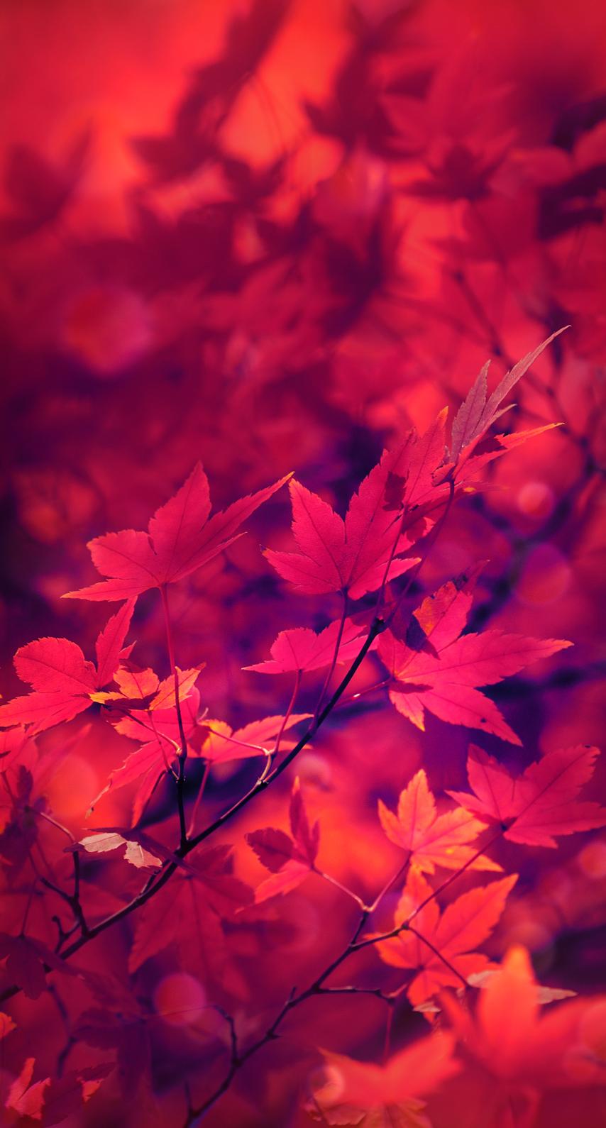 fall, light