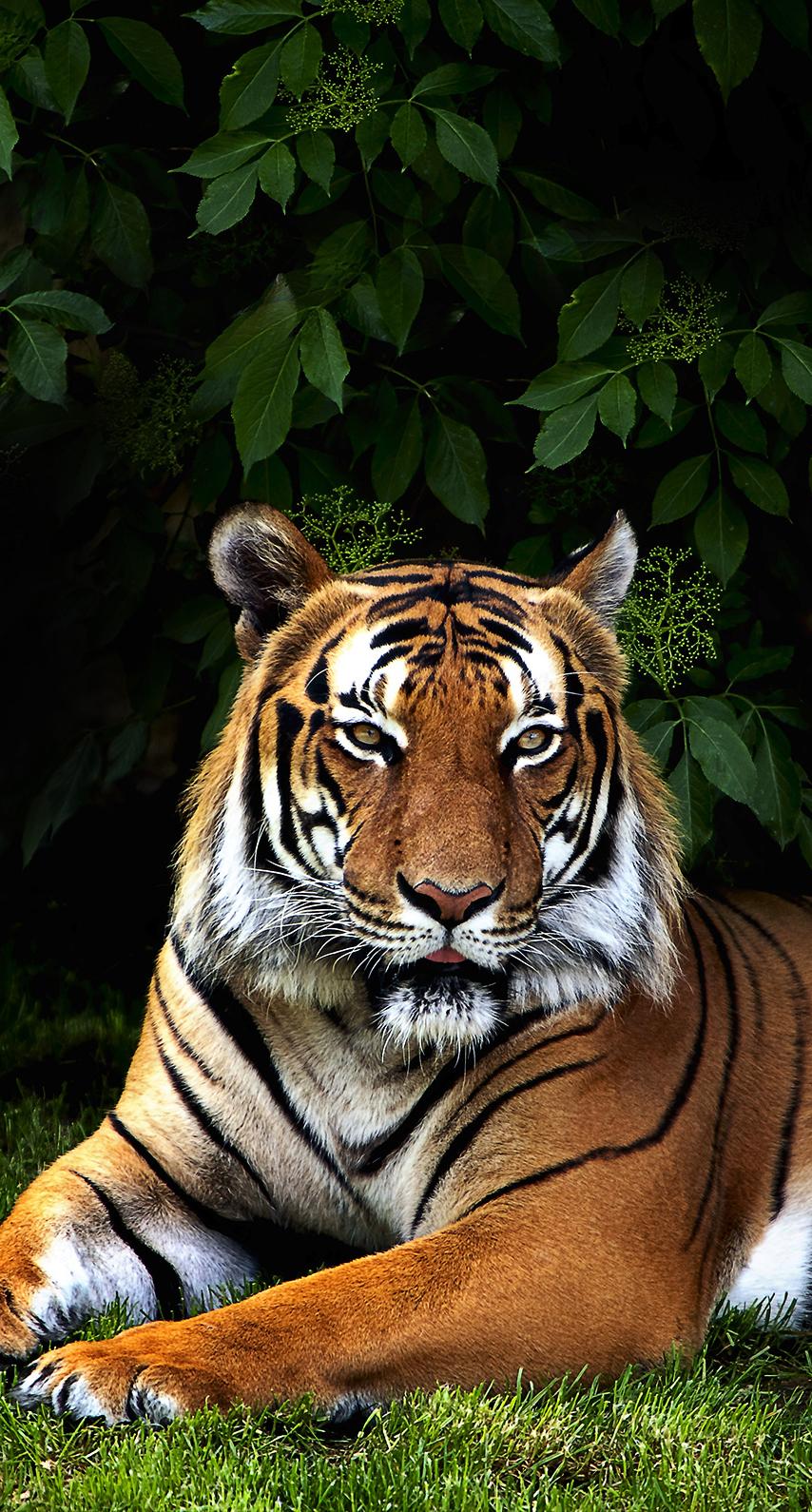 zoo, wildlife