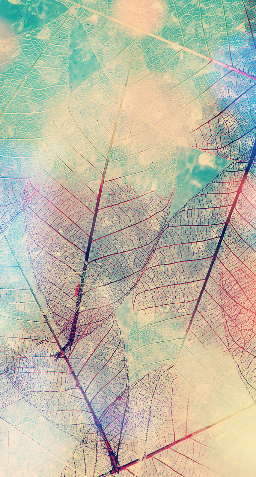 leaf, abstract