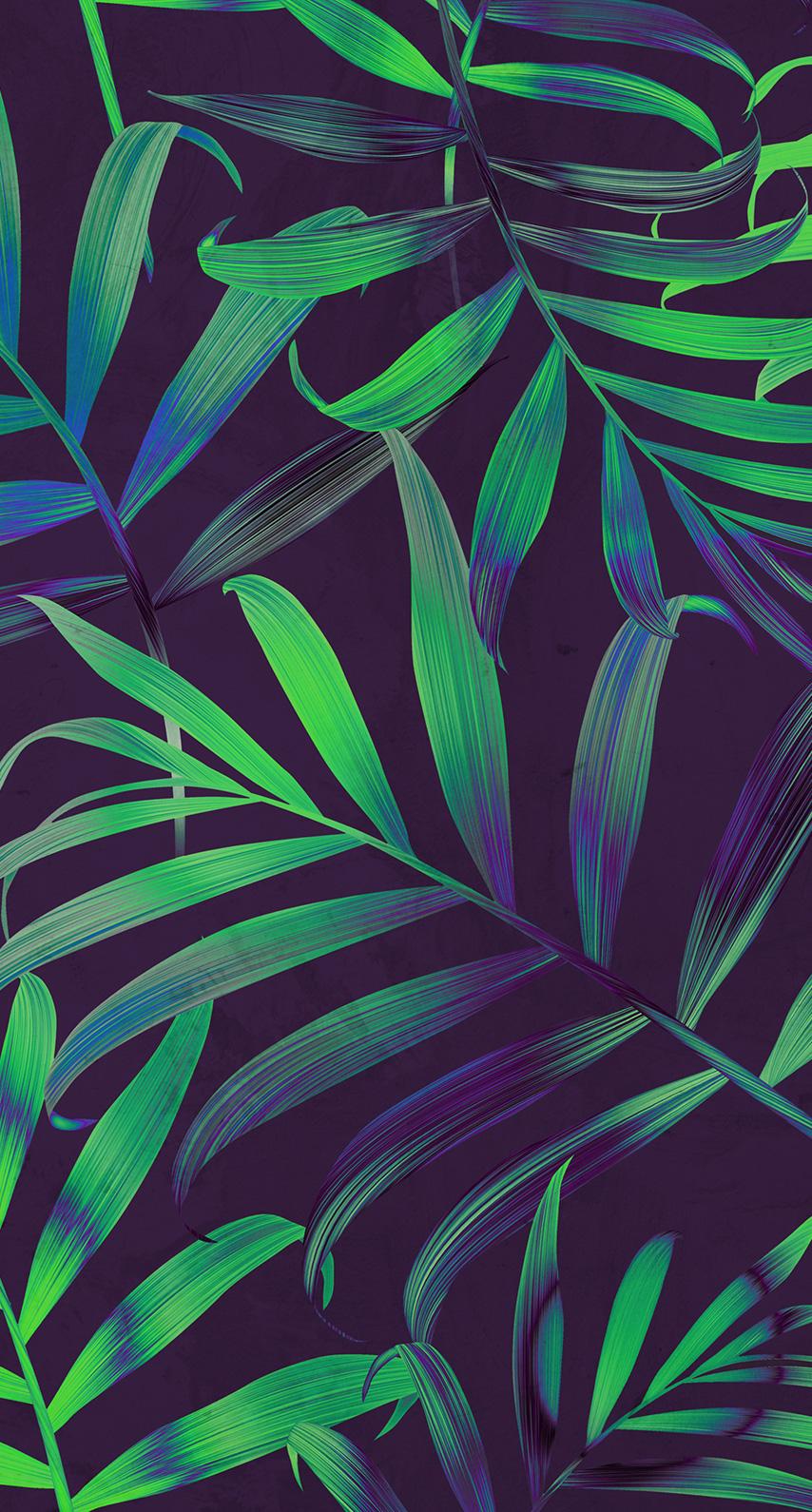 palm tree, arecales
