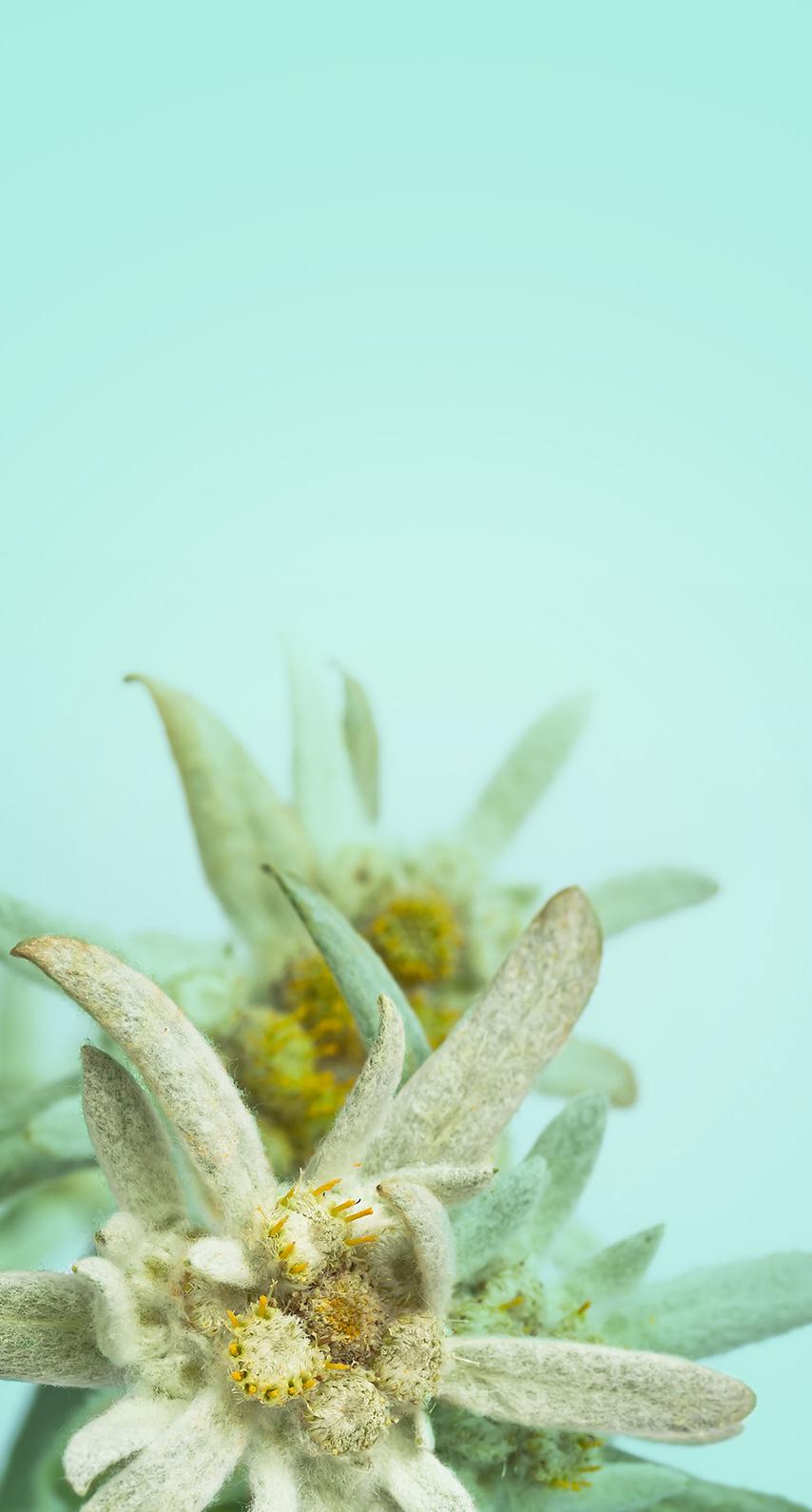 plant, plant stem