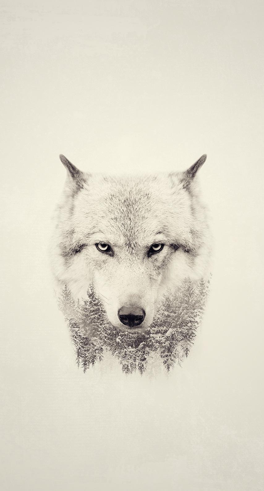 wolf, dog