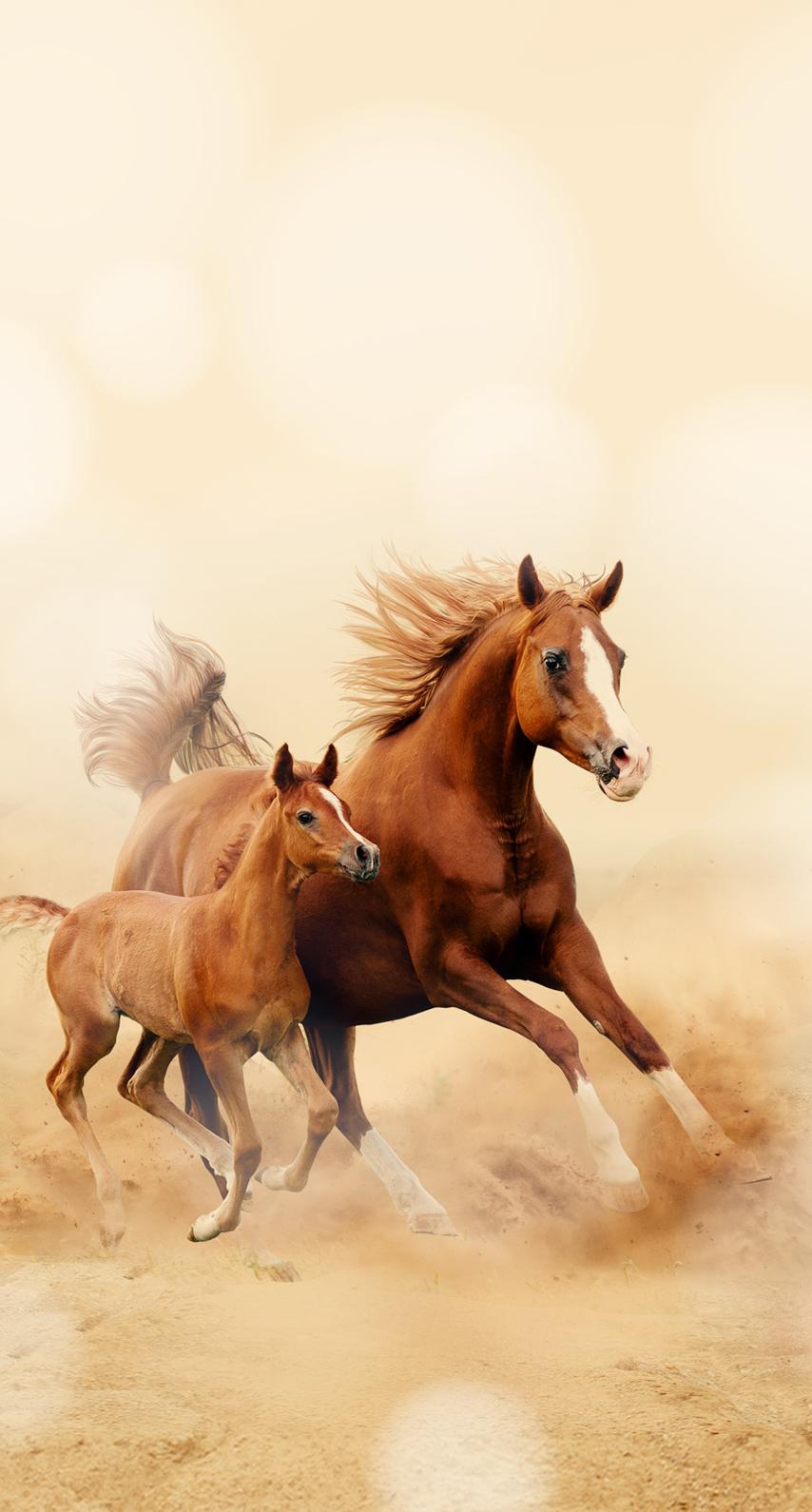 cavalry, mare