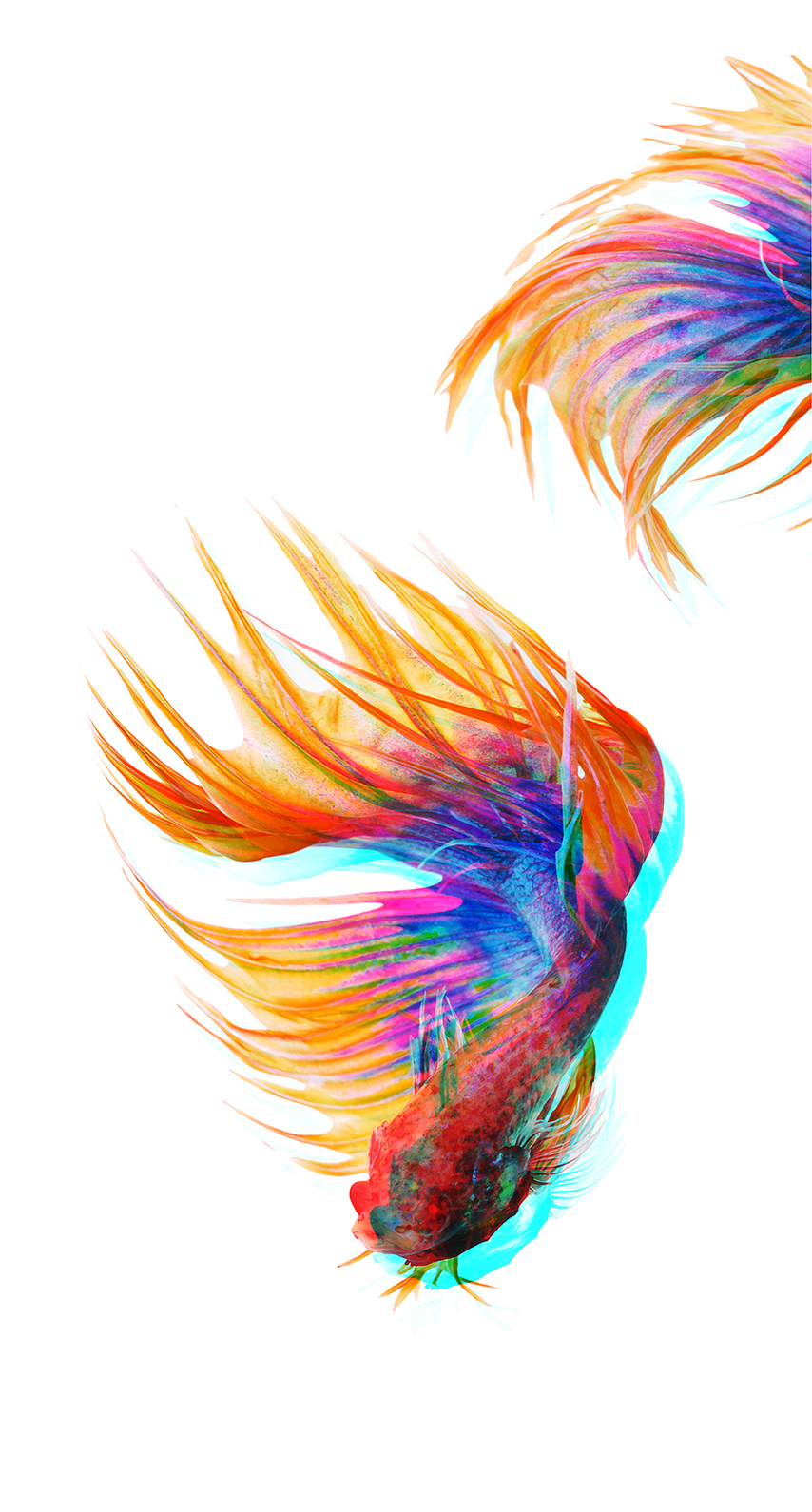 feather, fish