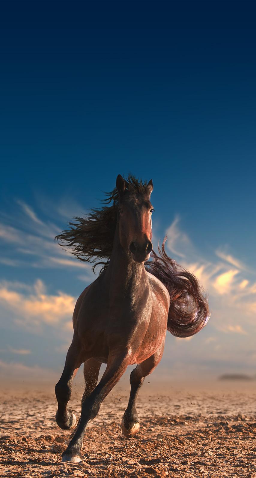 equine, cavalry