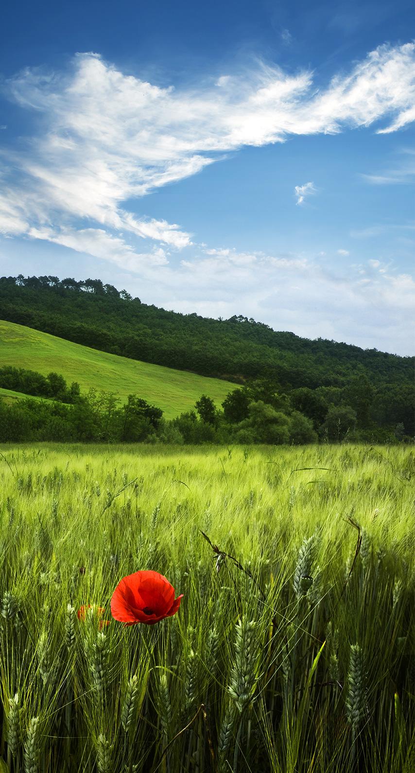 rural, hayfield