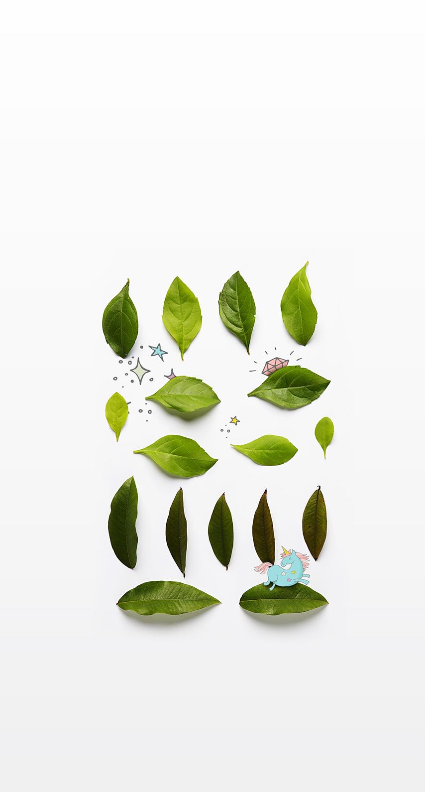 flora, environment