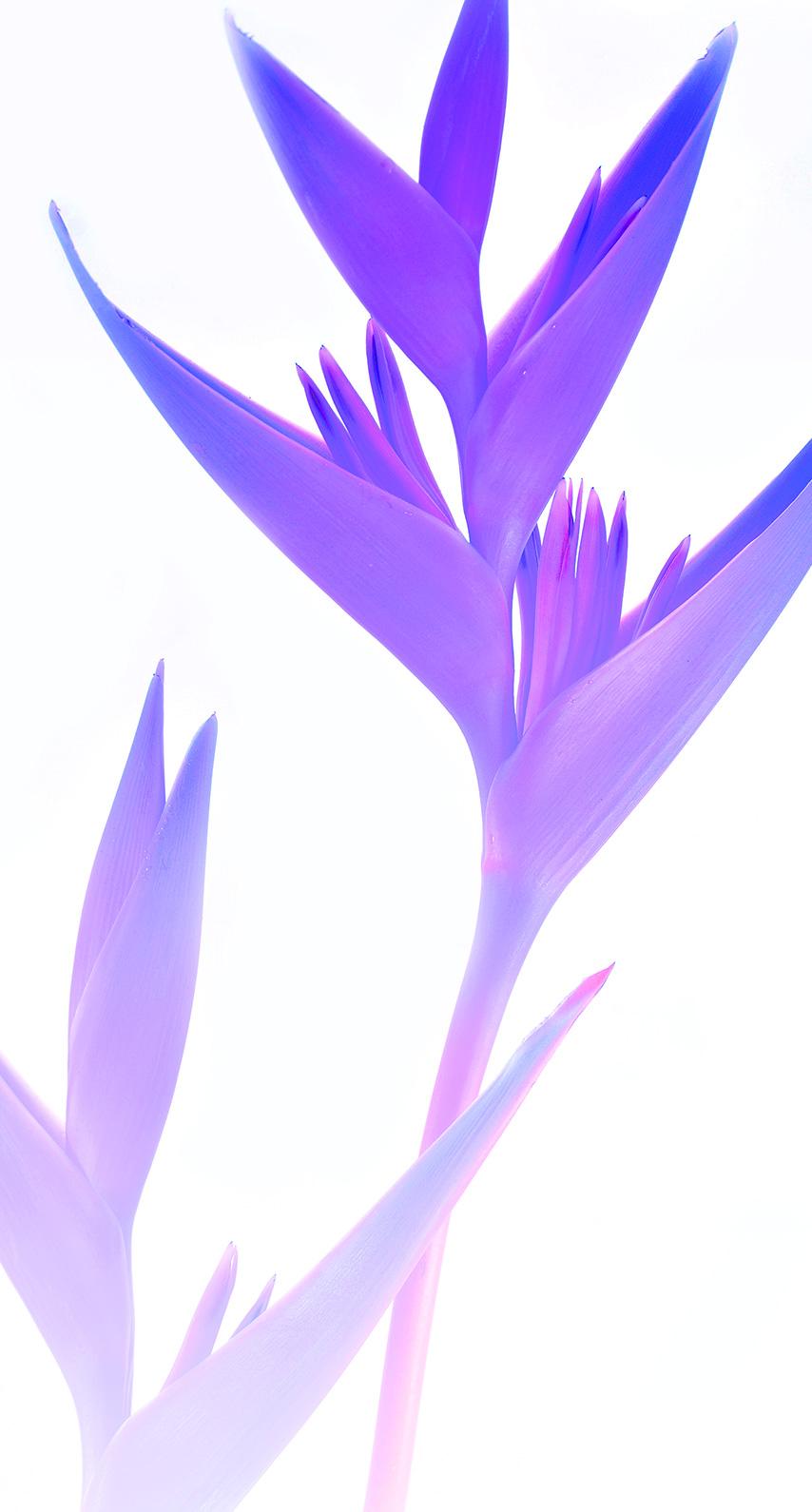 texture, leaf