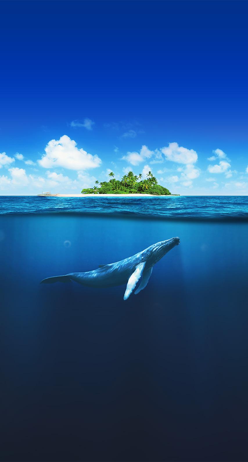summer, diving