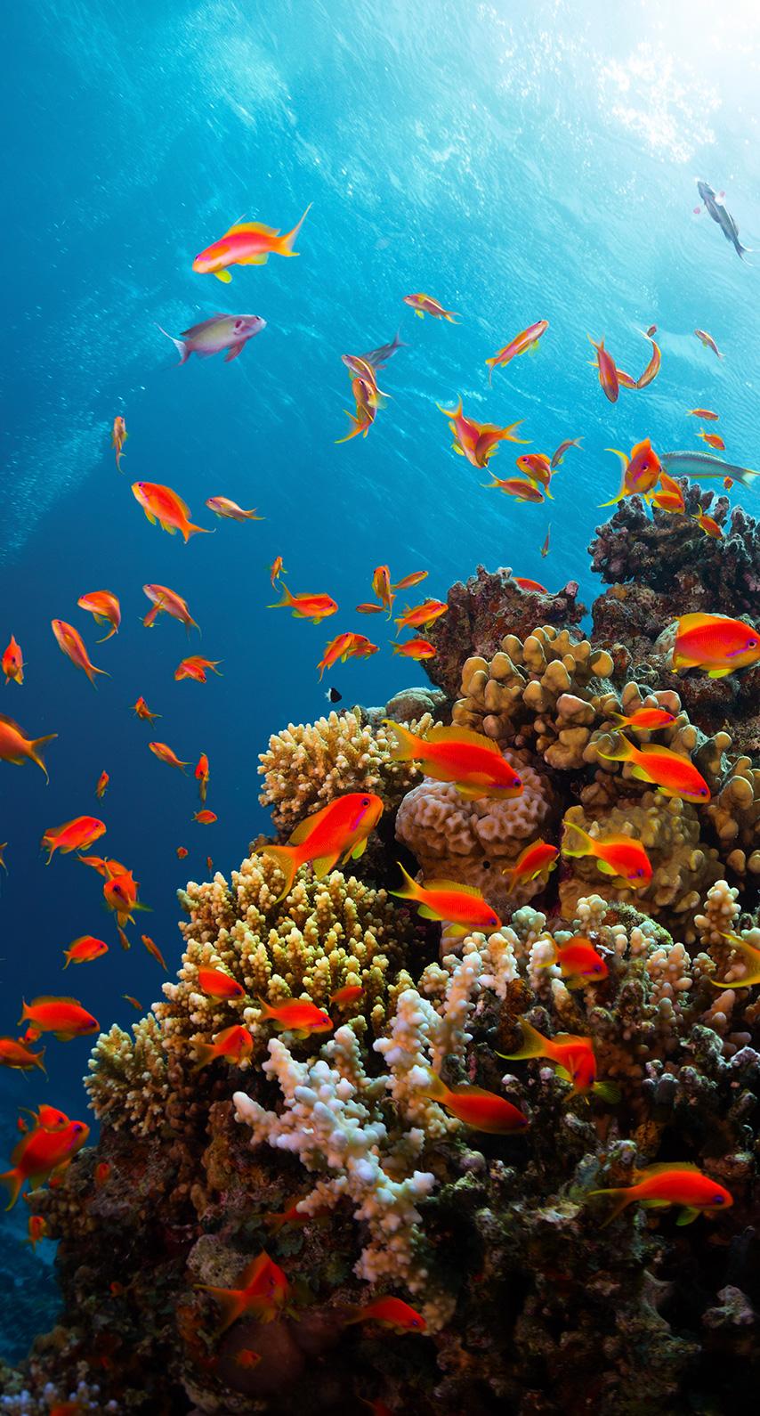 aquatic, goldfish