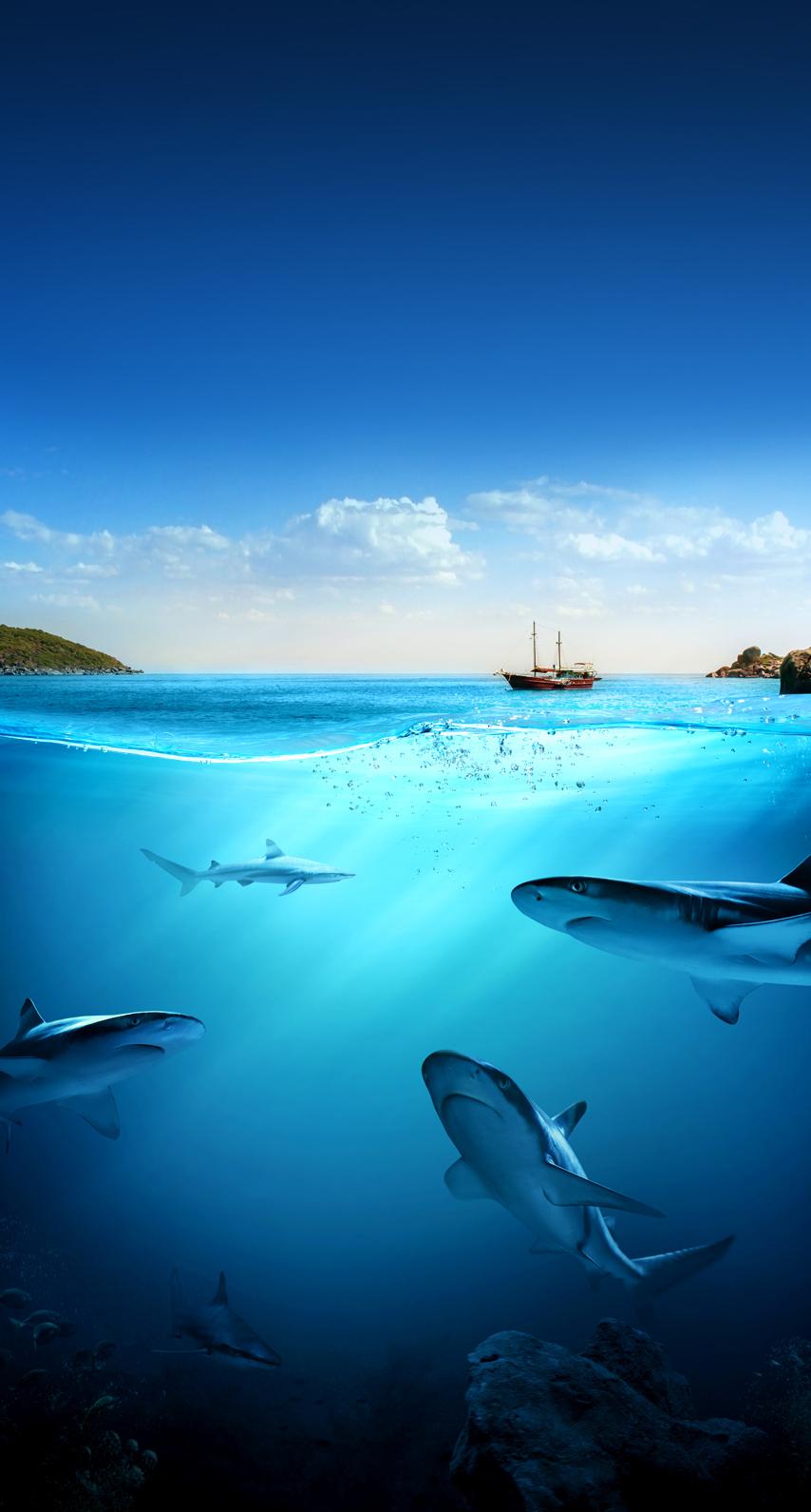 wave, shark