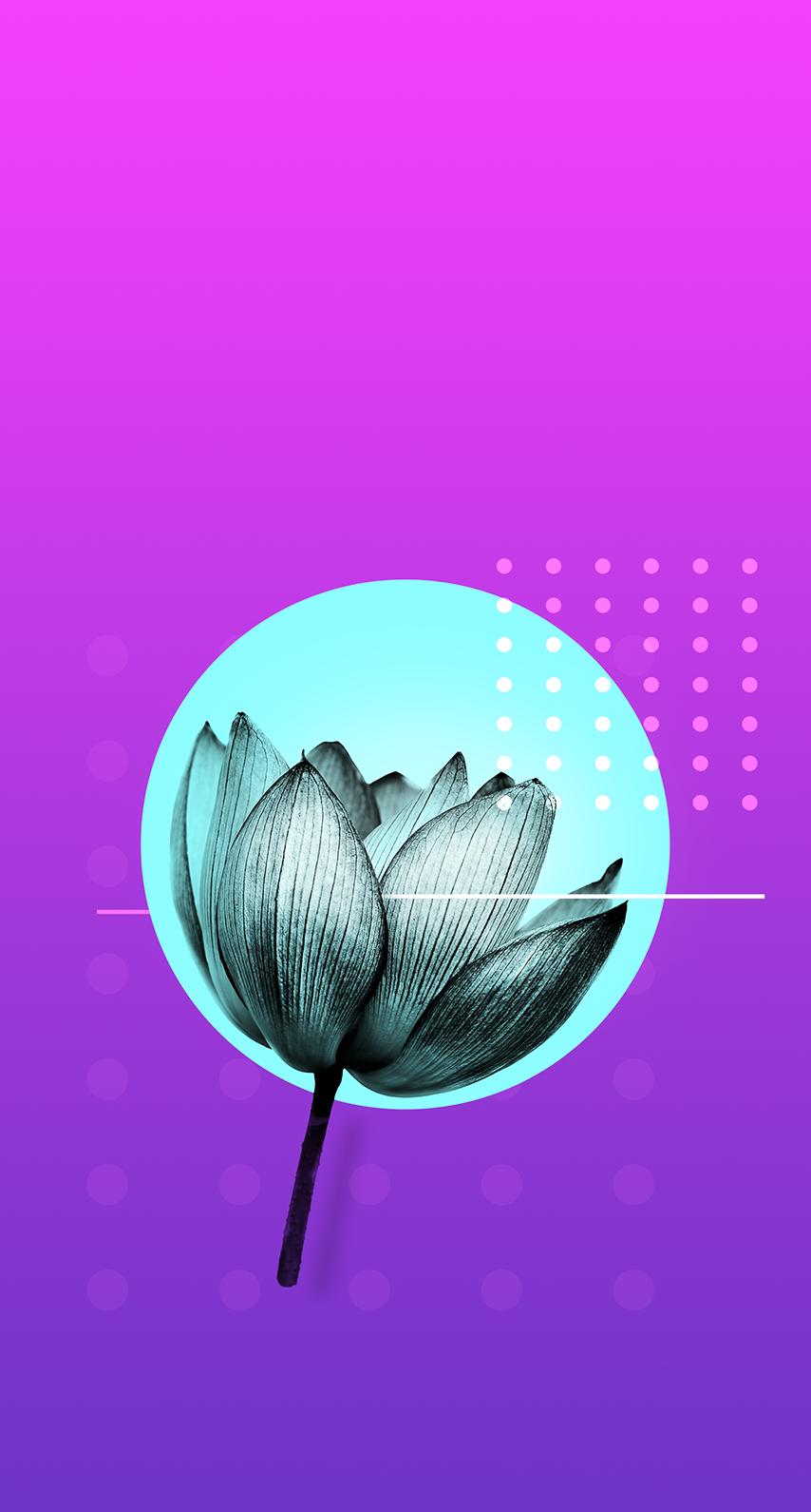 petal, vector