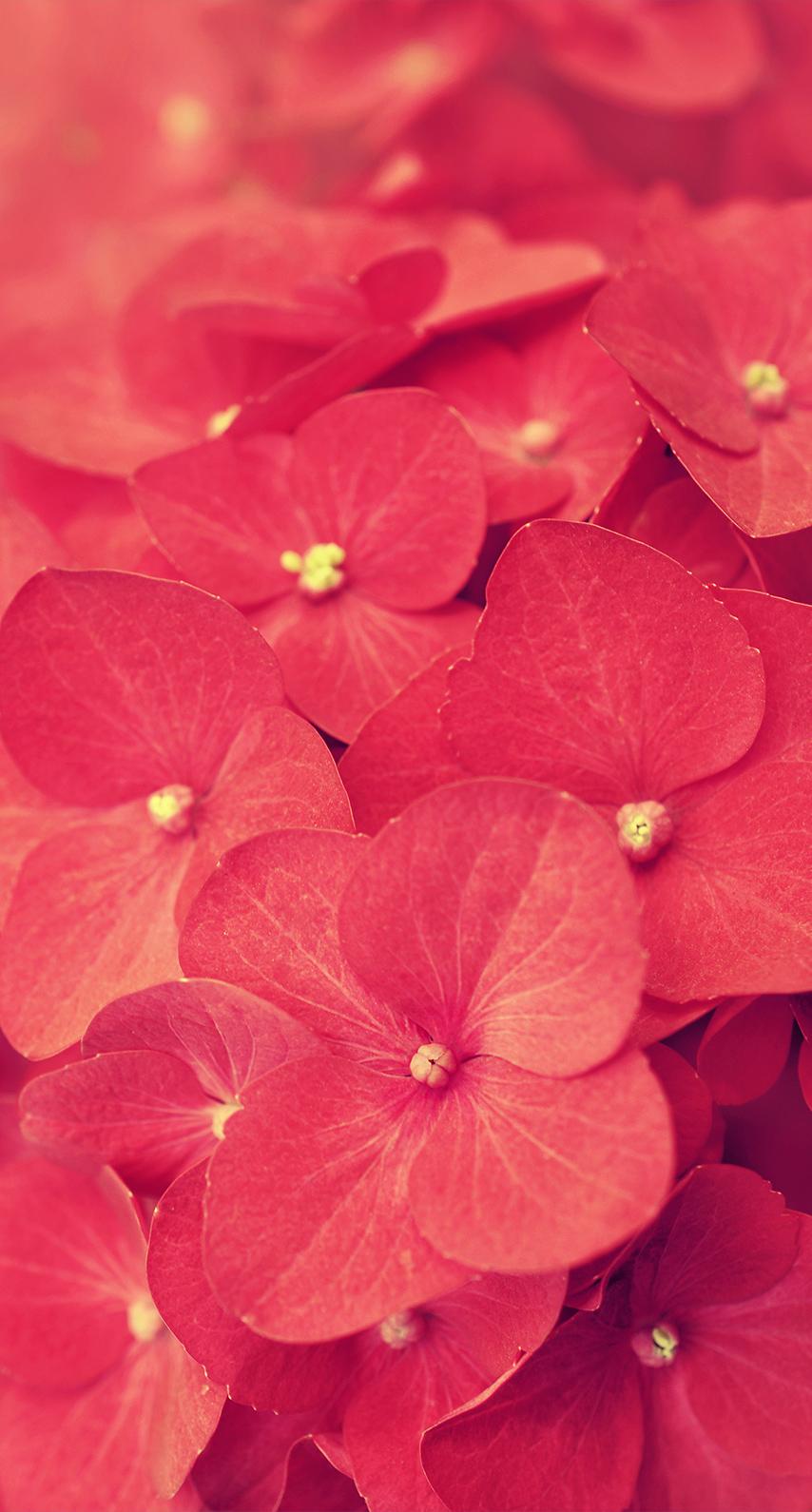 summer, bouquet