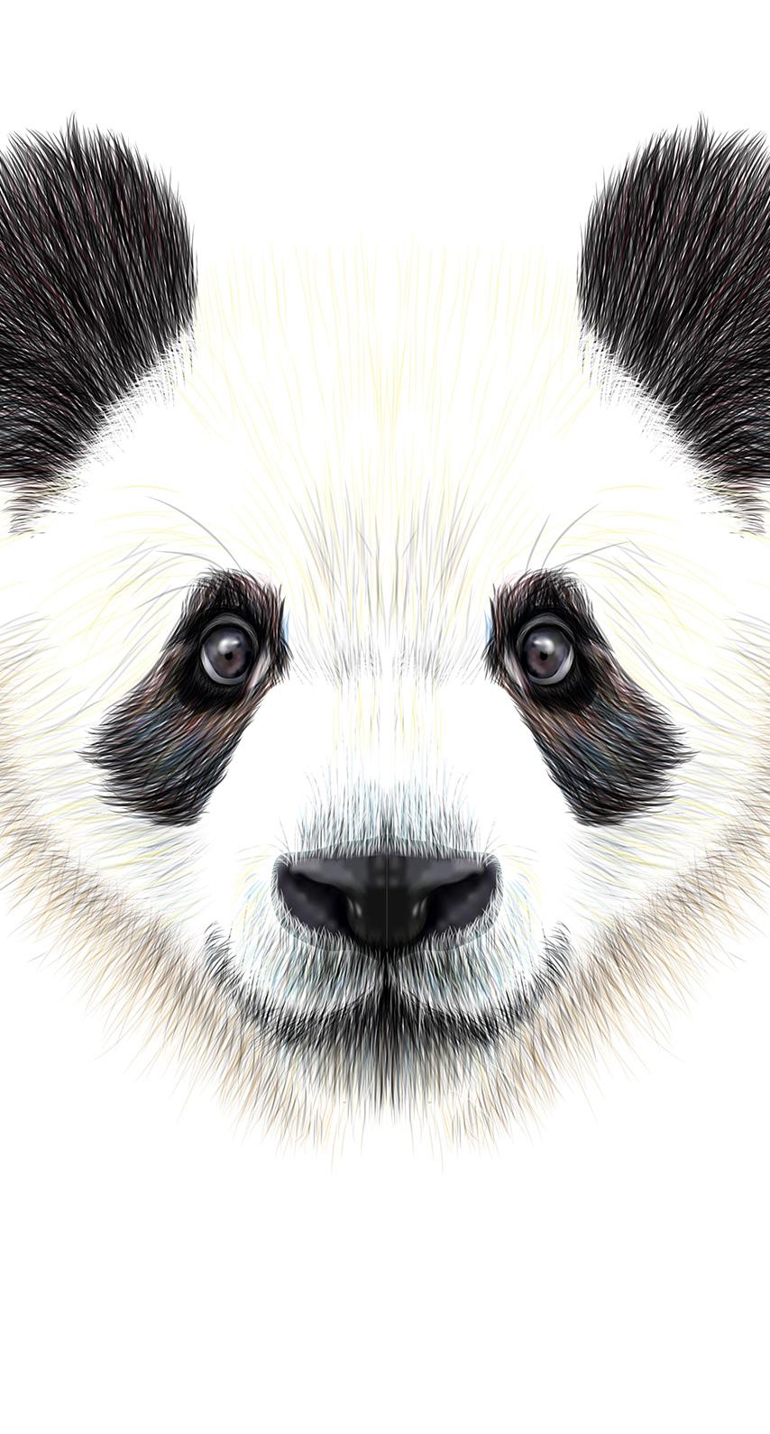 whiskers, terrestrial animal