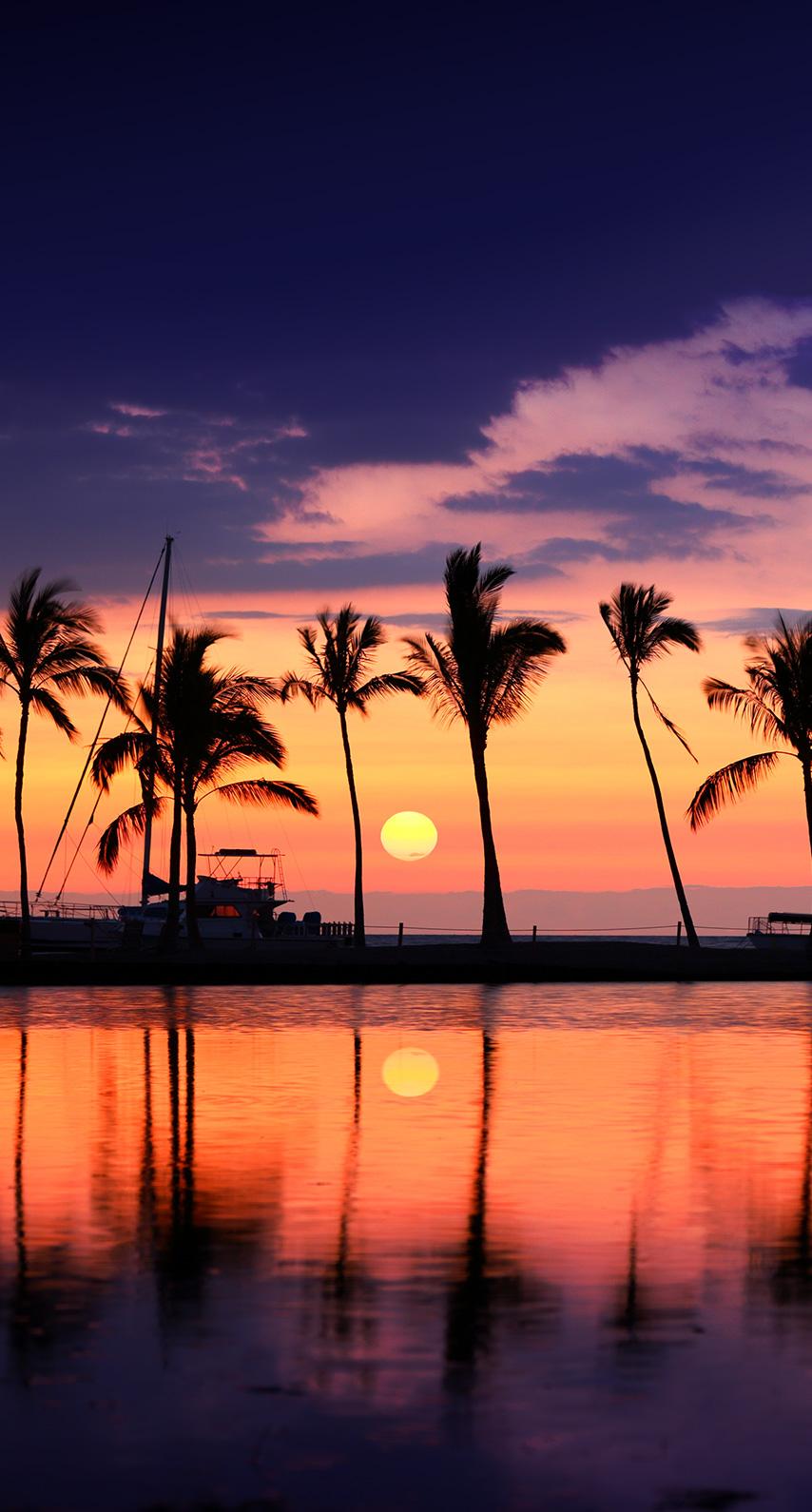 palm, seashore