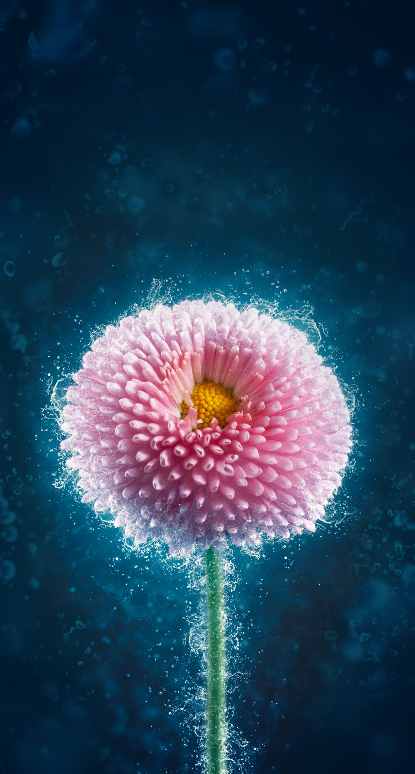 petal, underwater
