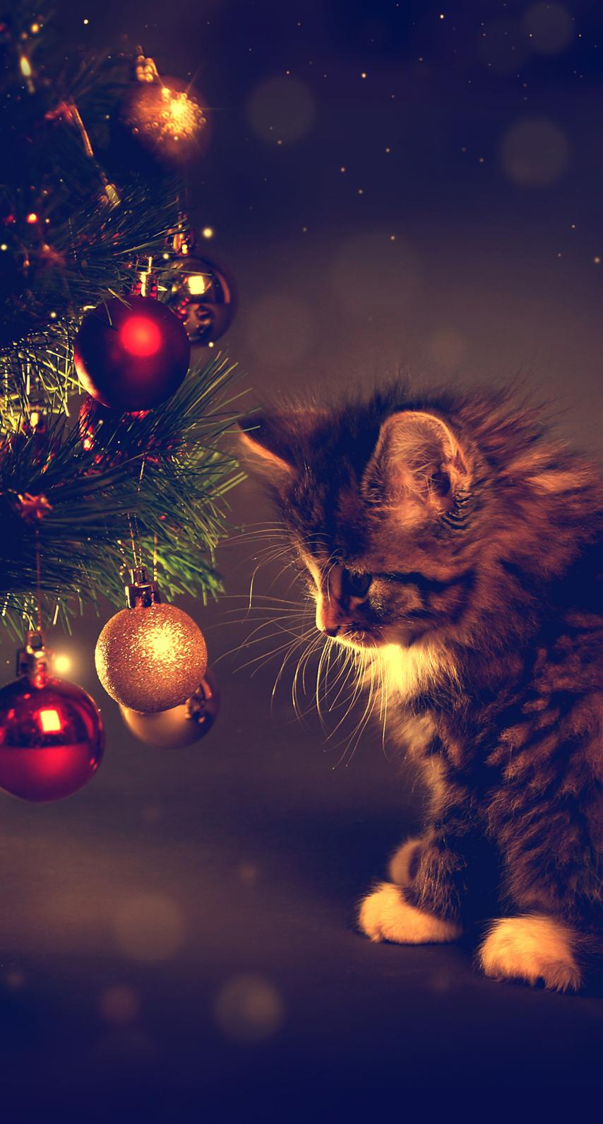 new year, kitty