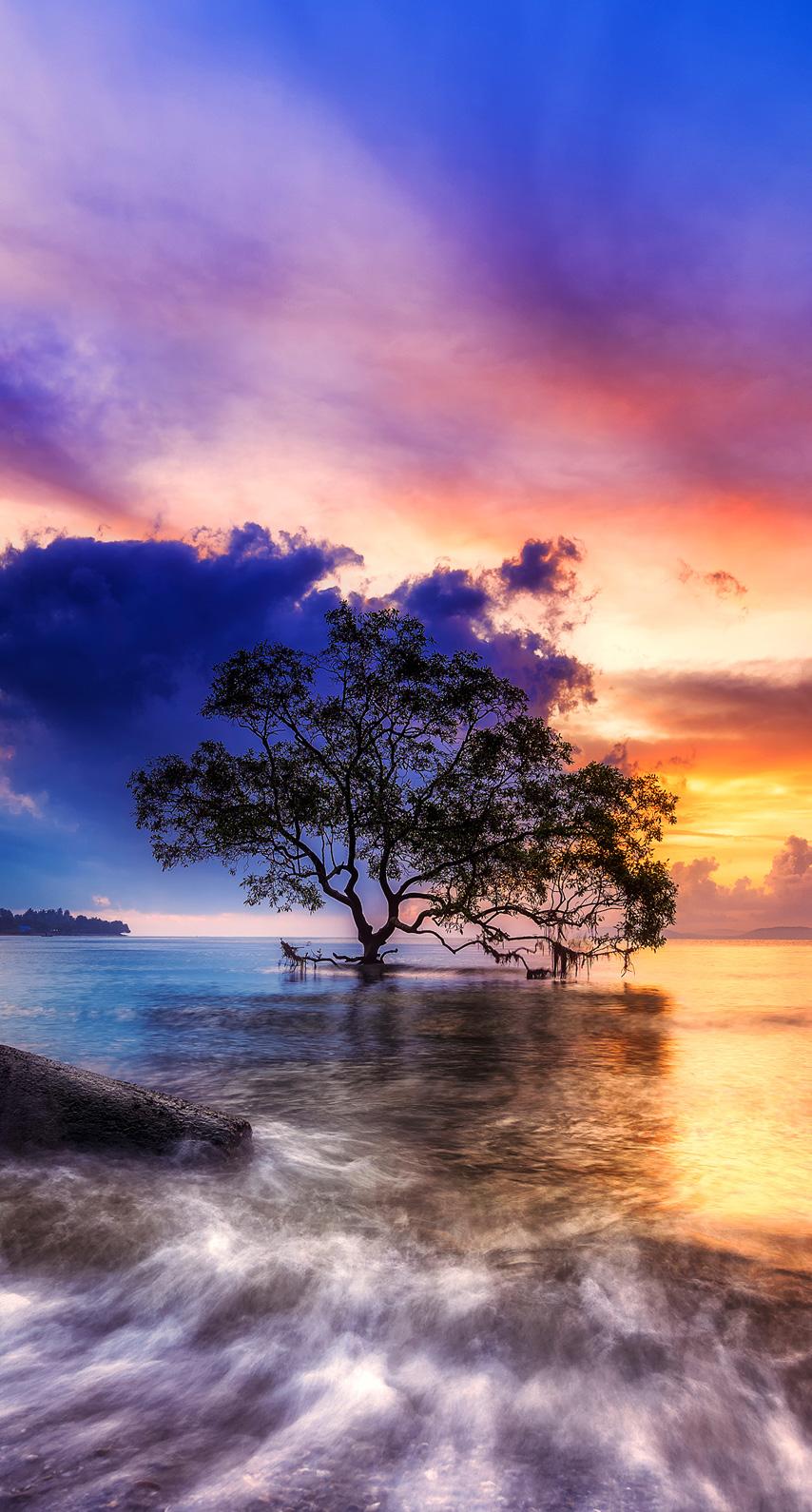sunrise, tree