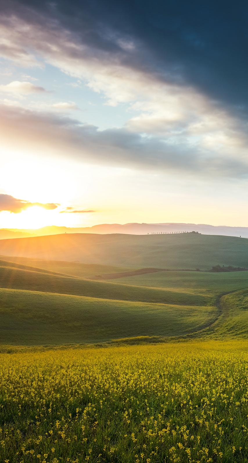 crop, grassland
