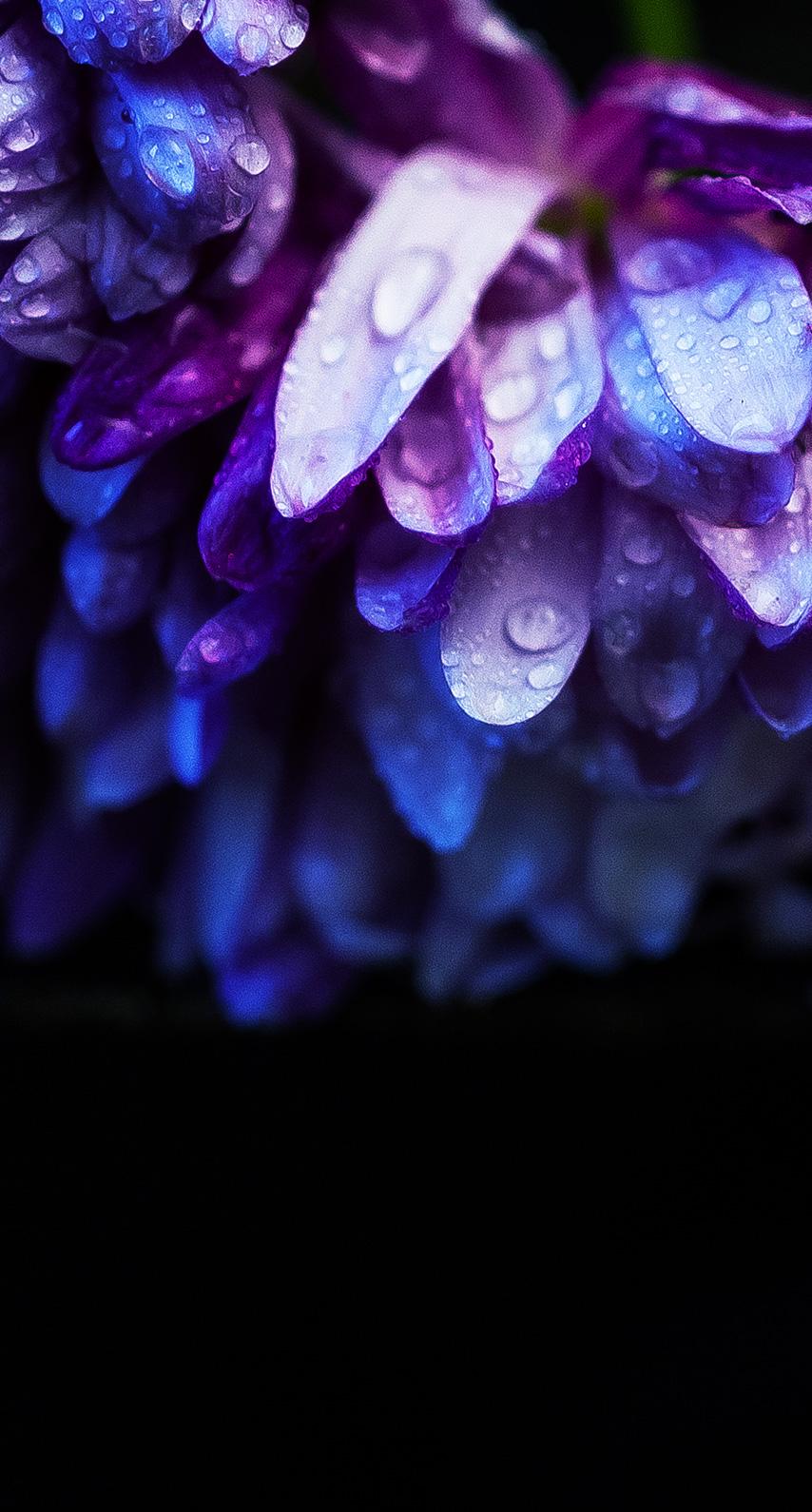 violet, nature