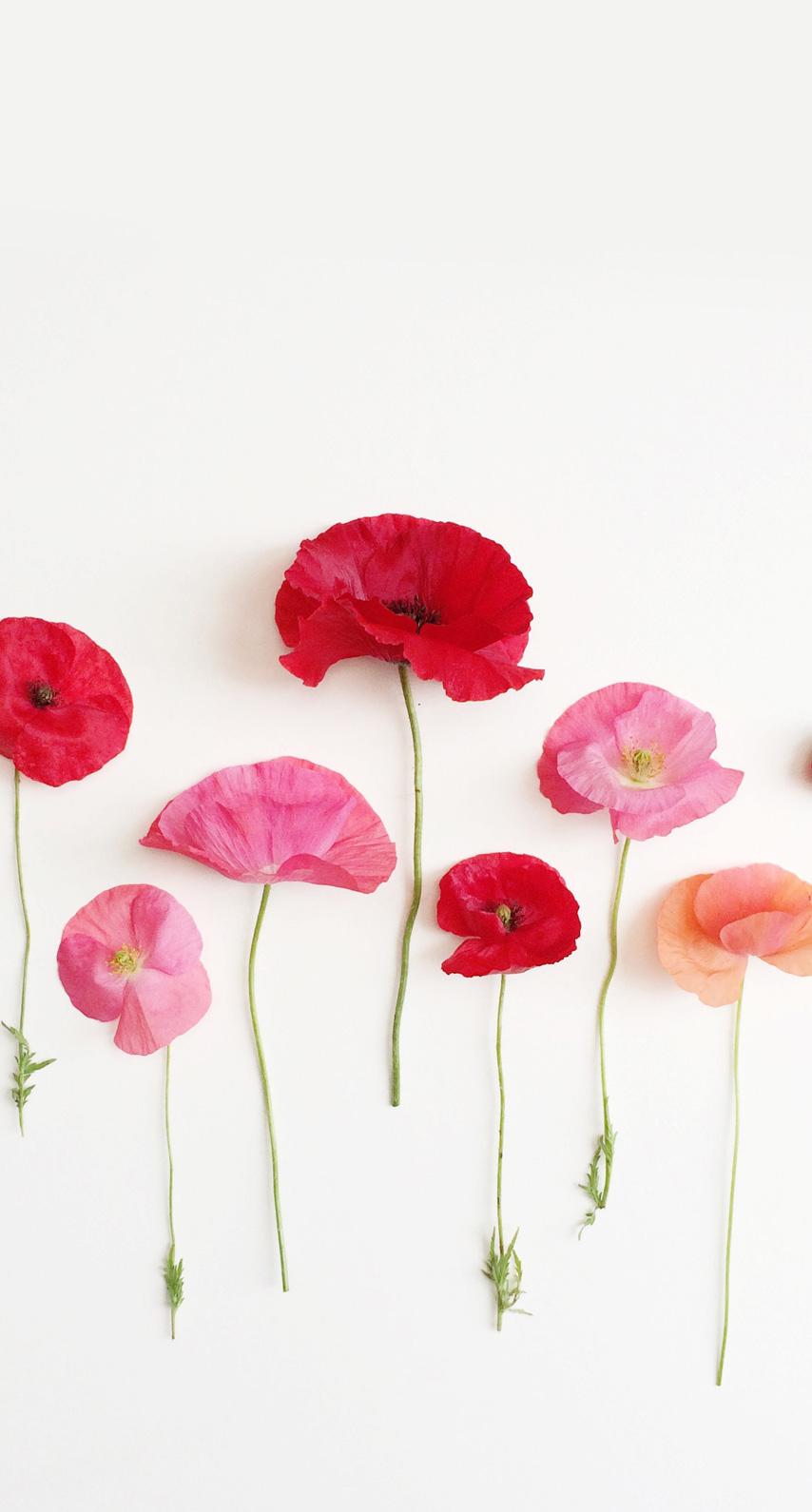 romantic, flowers