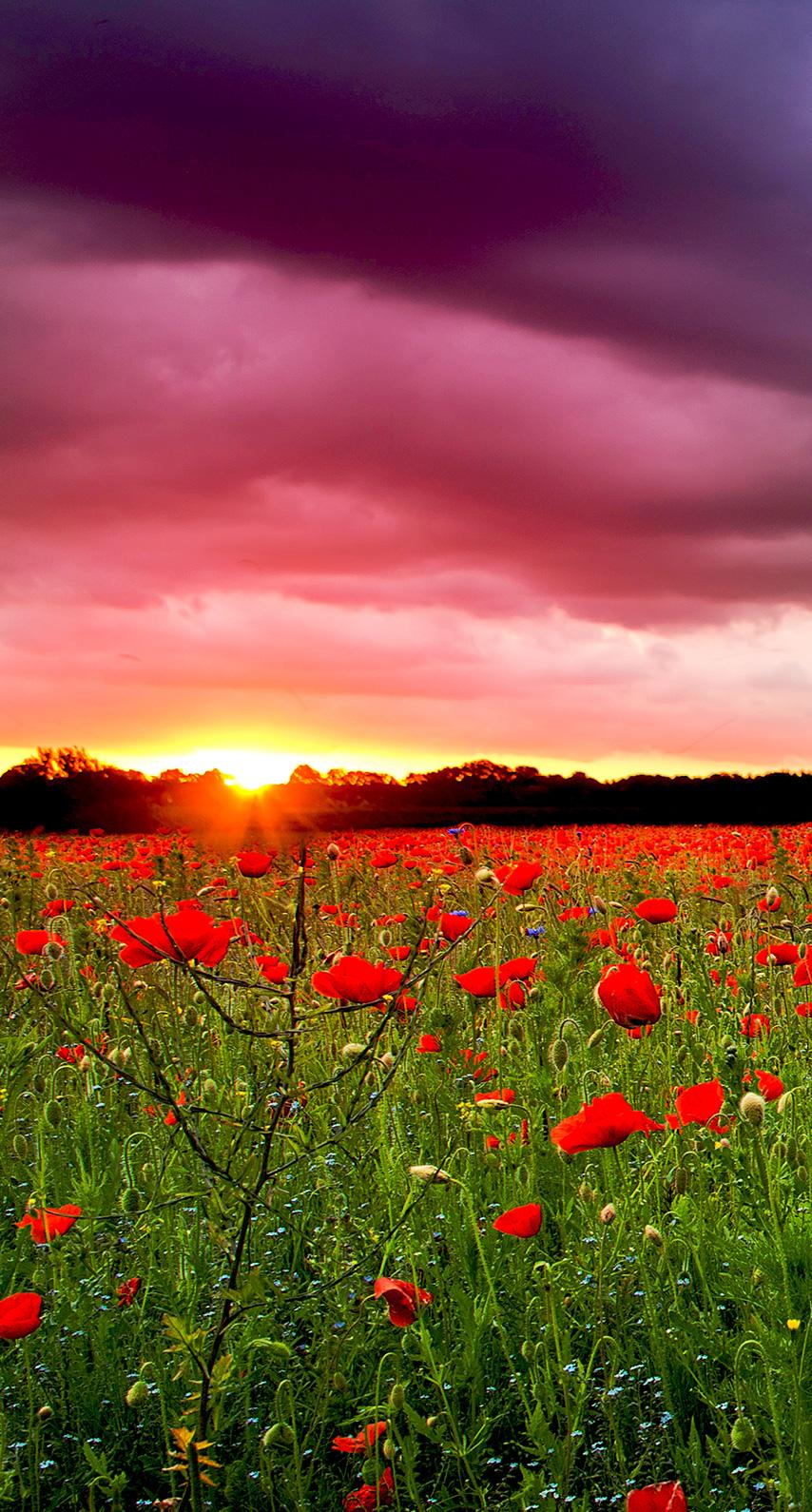 flora, horizon