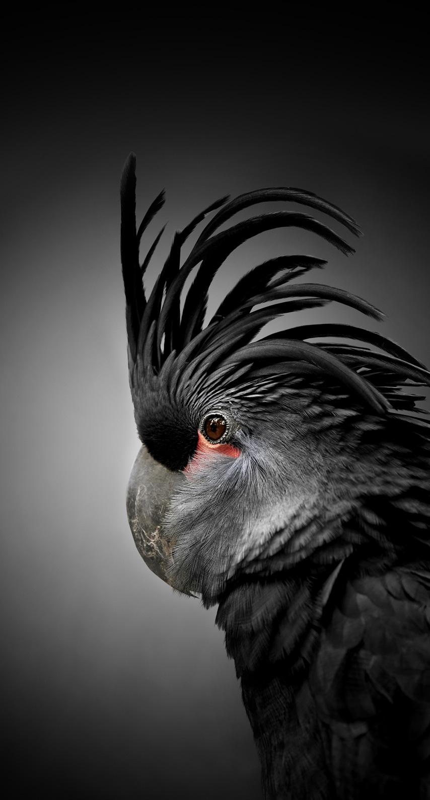dark, bird
