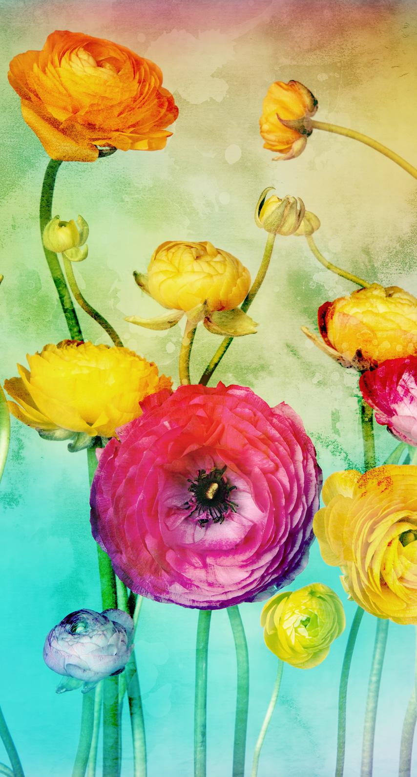 wildflower, garden roses